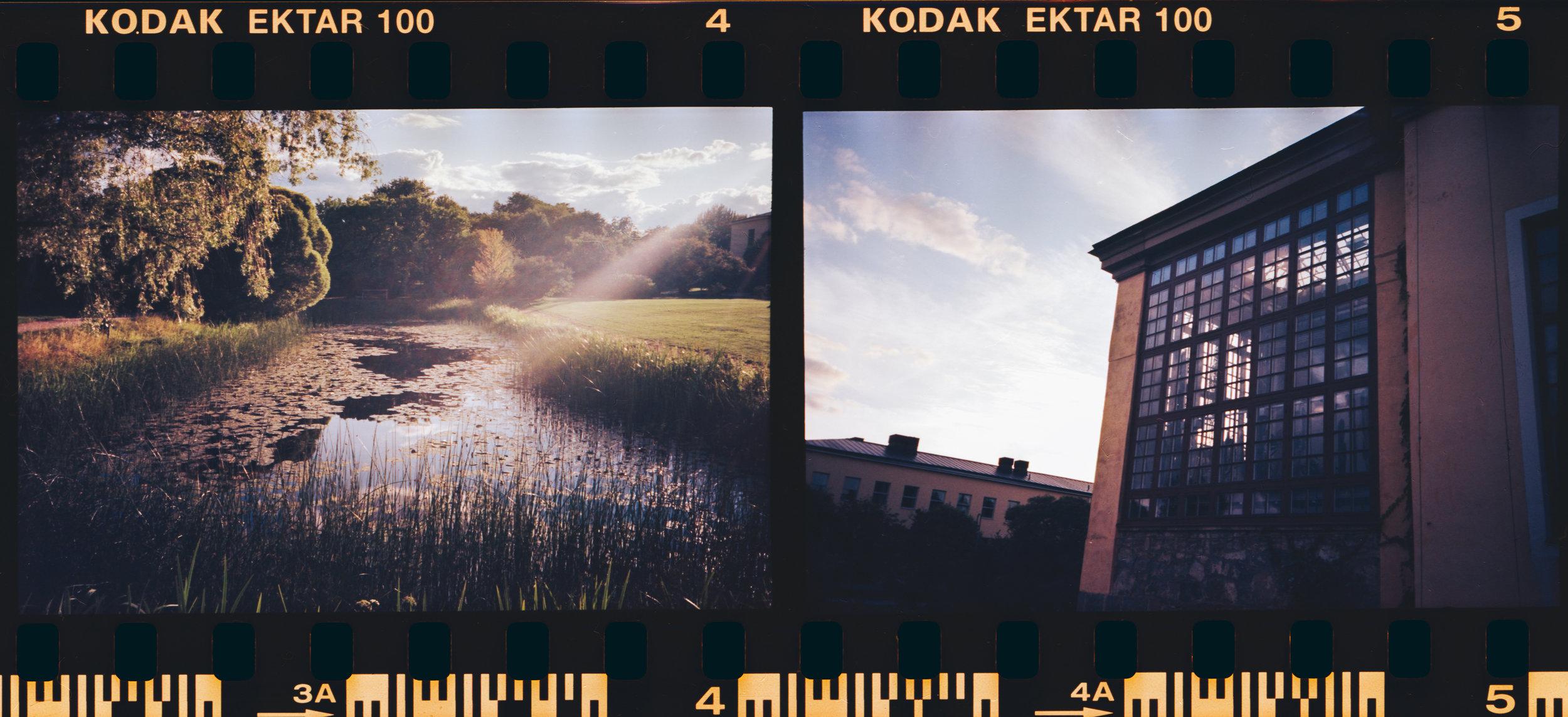 Botaniska / Kodak Ektar 100 / Olympus Mju I