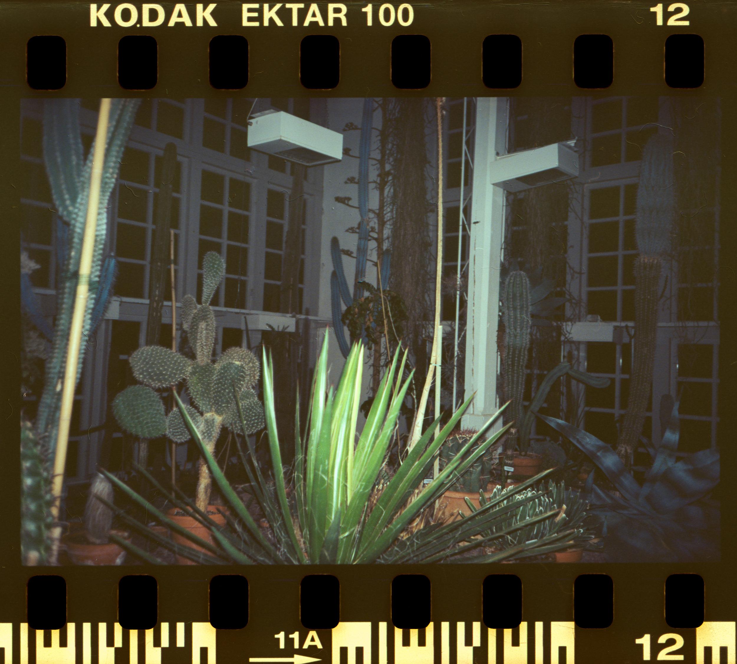 Botaniska II / Kodak Ektar 100 / Olympus Mju I