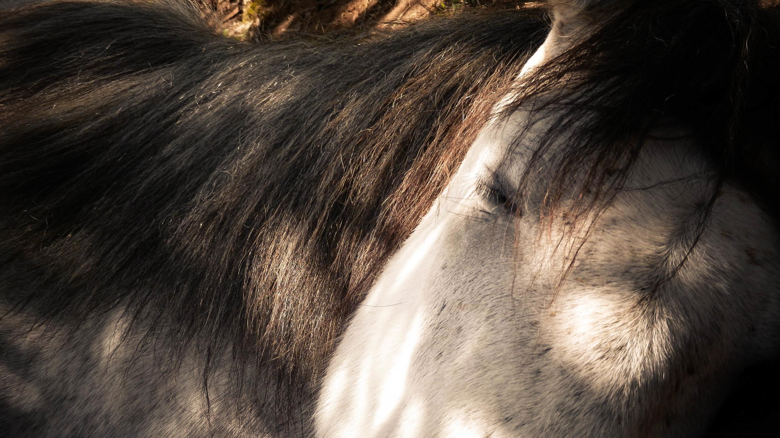 HorseTreks-36.jpg