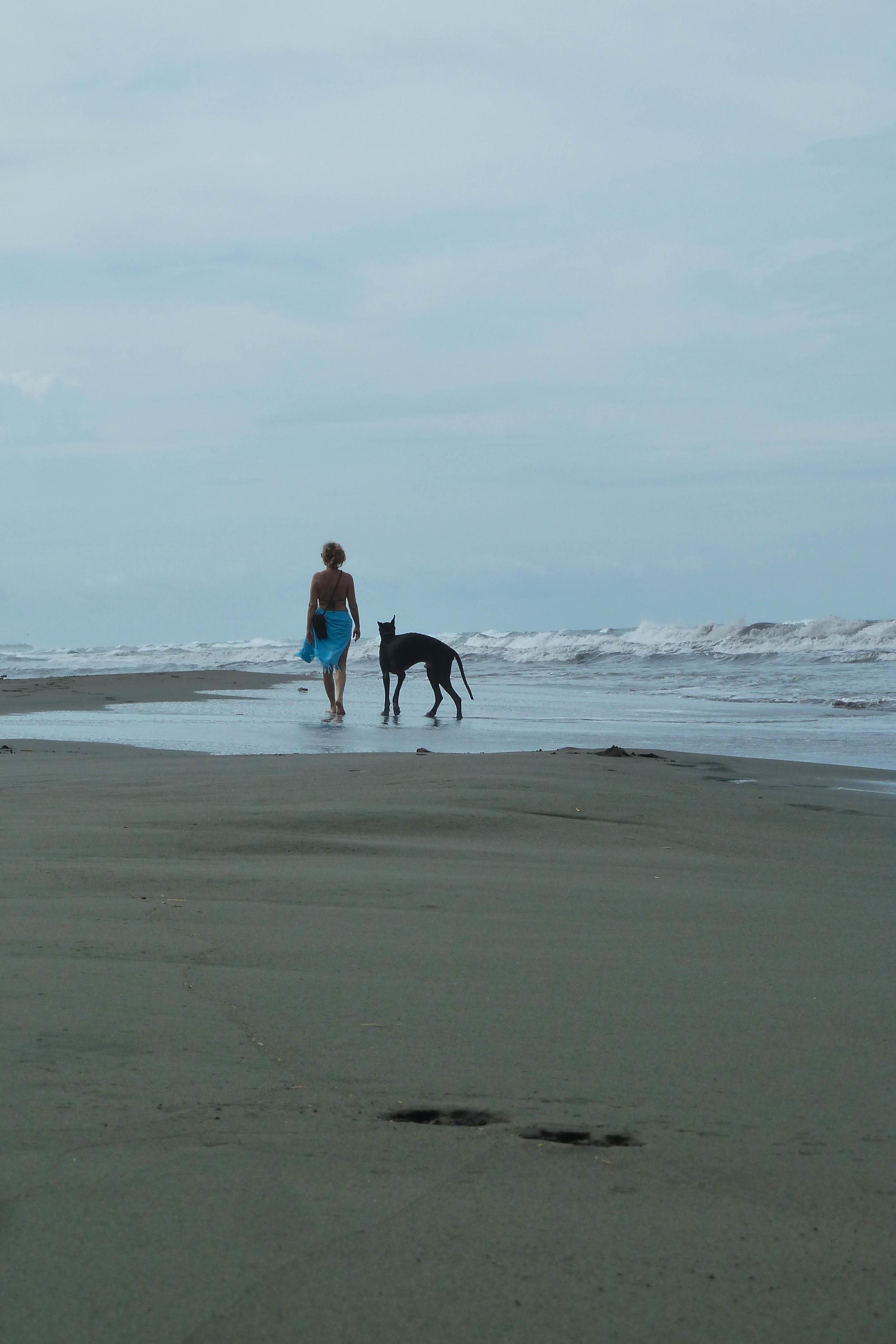Giant Schnauzer on beach in Costa Rica