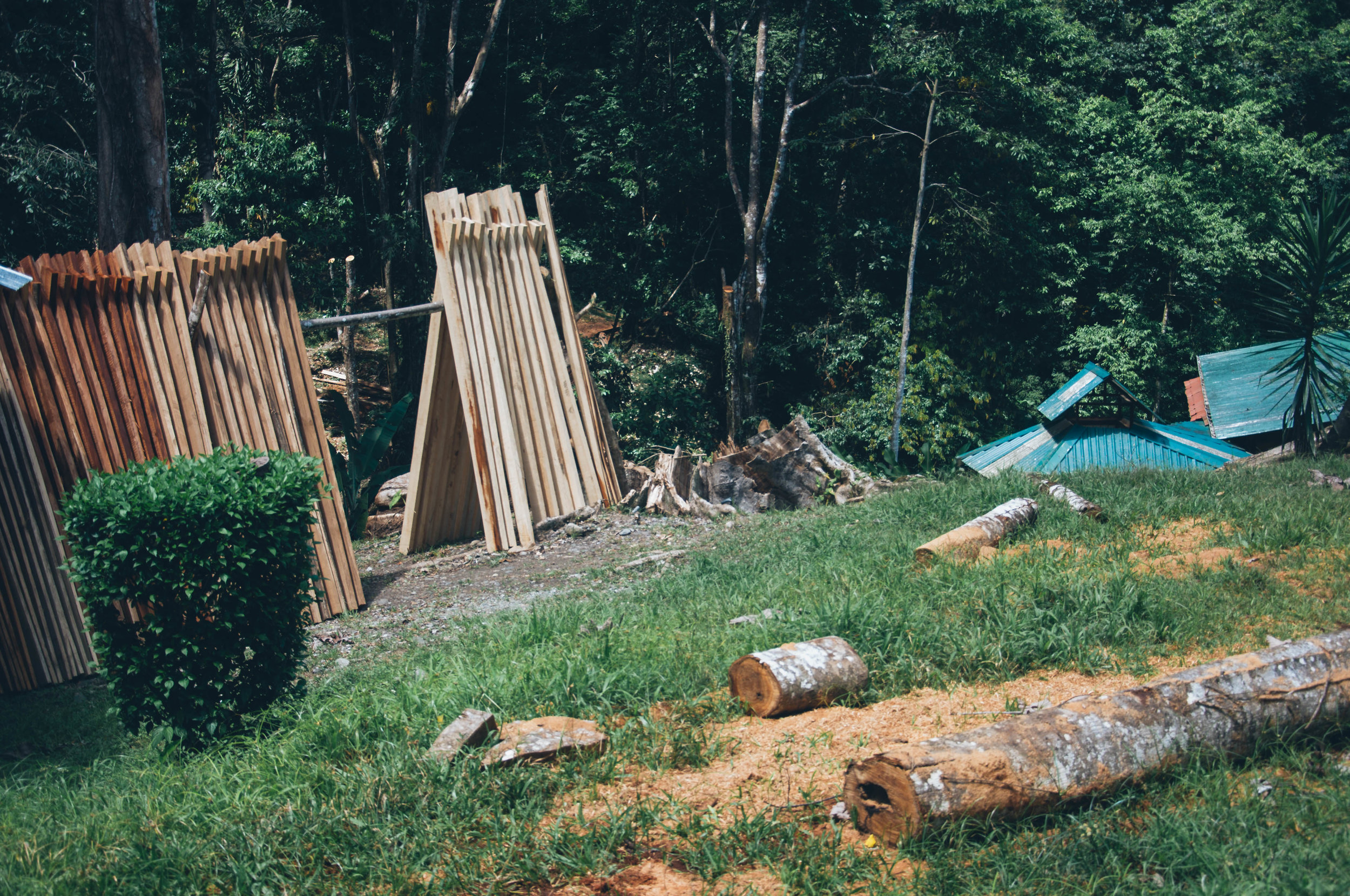 Tropical hardwoods of Laurel, Nispero, Ahoche & Amarillion