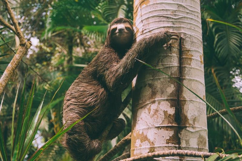 sloths-costa-rica-1.jpg