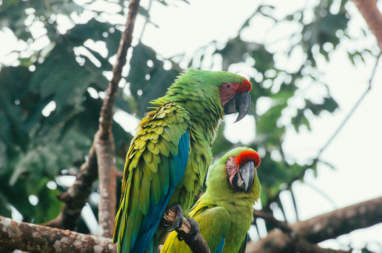 macaws-preservation-1.jpg
