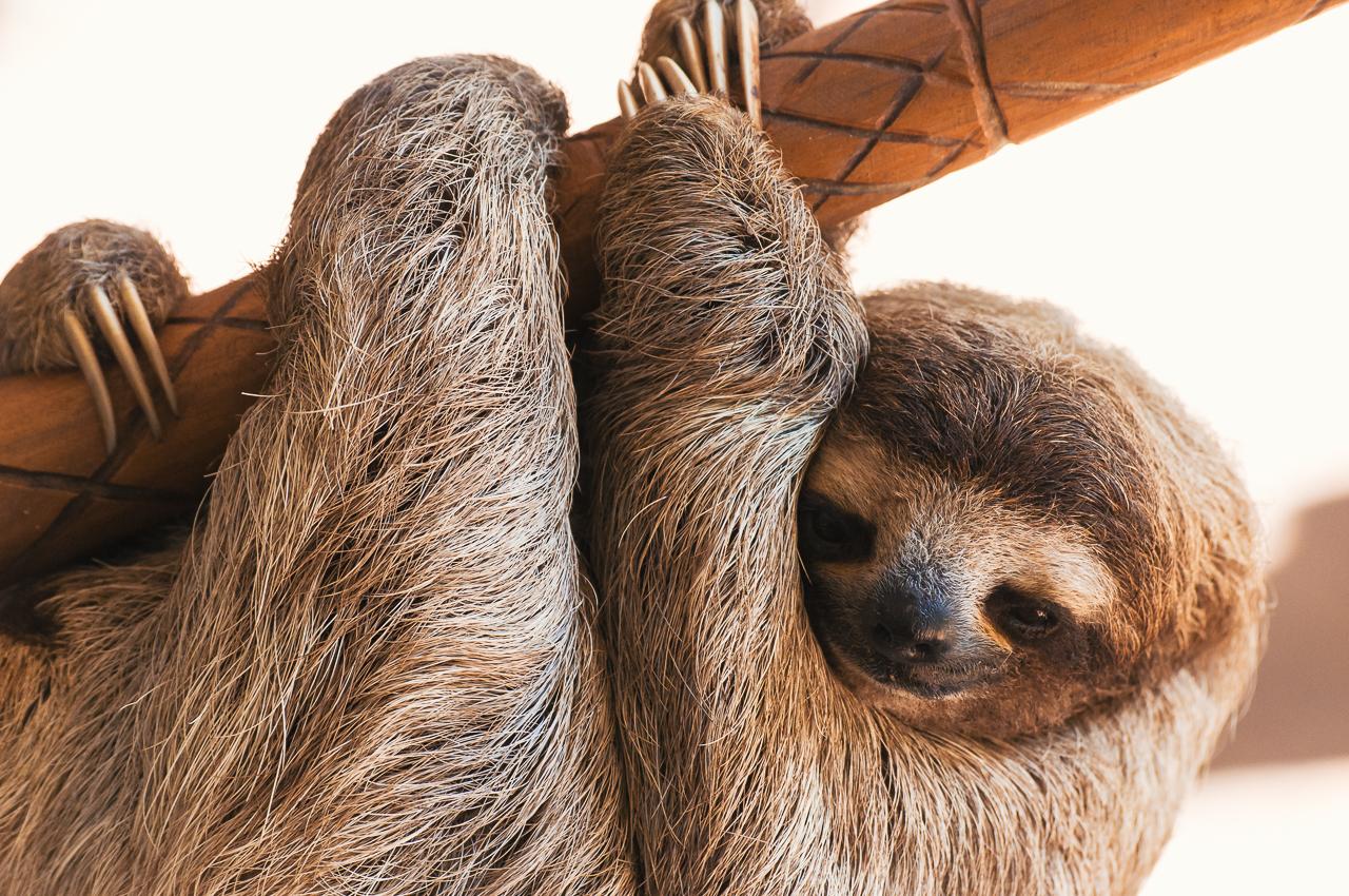 sloth-preservation-1-3.jpg