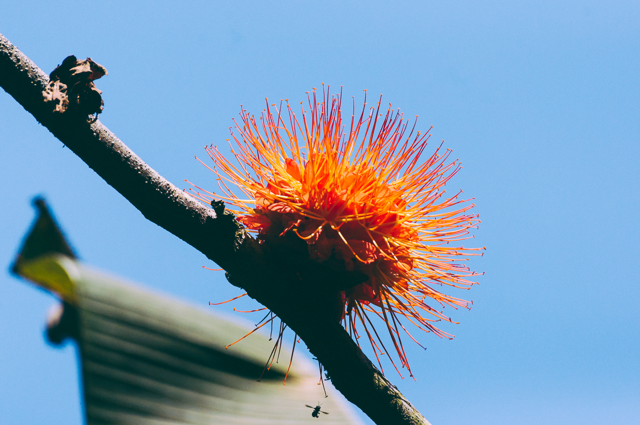 botanical-garden-3.jpg