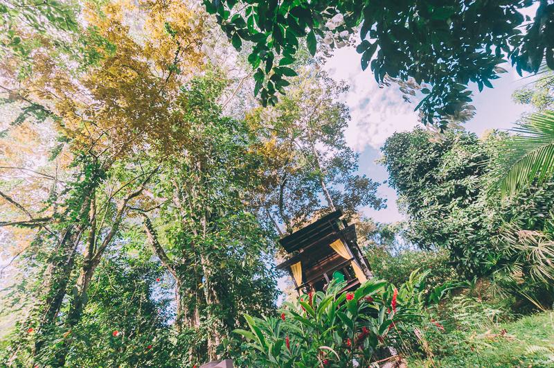 tree-house-costa-rica-1-2.jpg