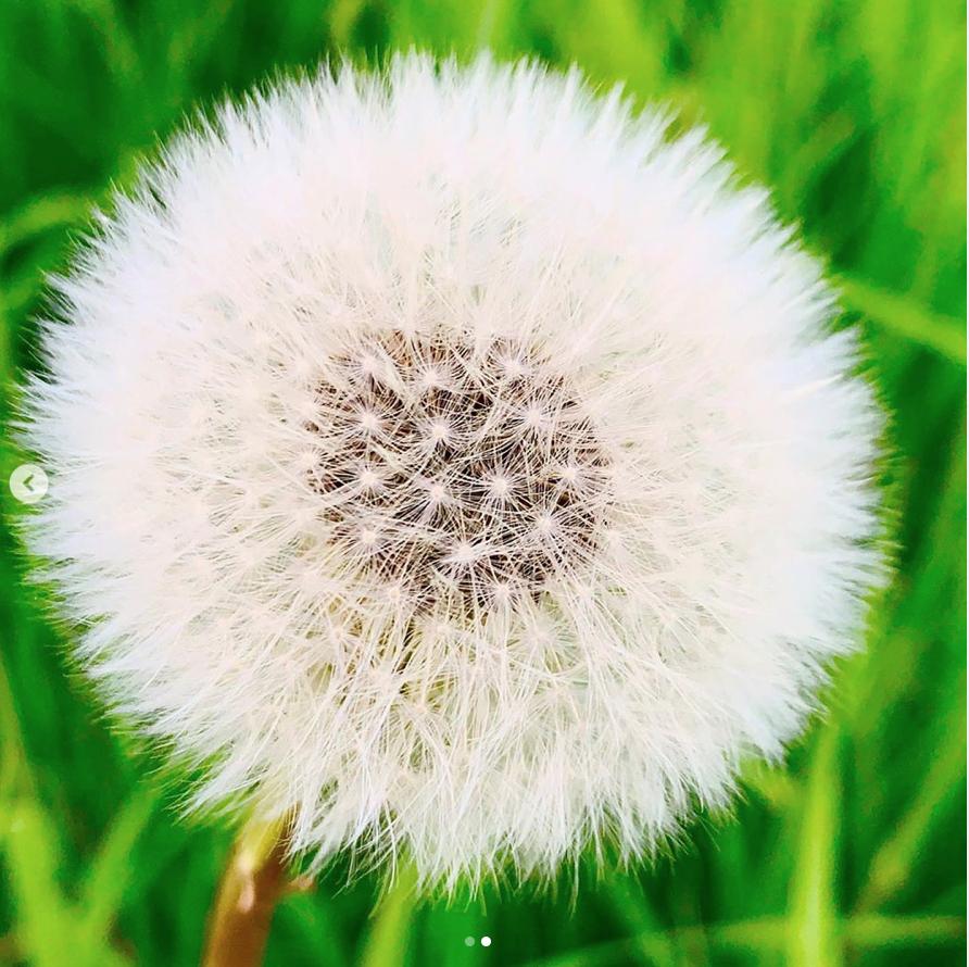 Screen Shot 2019-05-29 at 12.28.20 PM.png