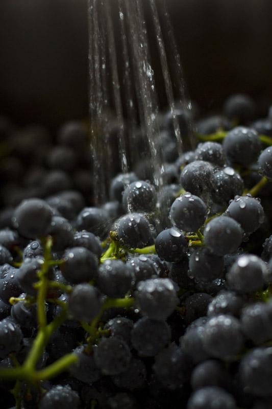GrapeJuice_Charla_006.jpg