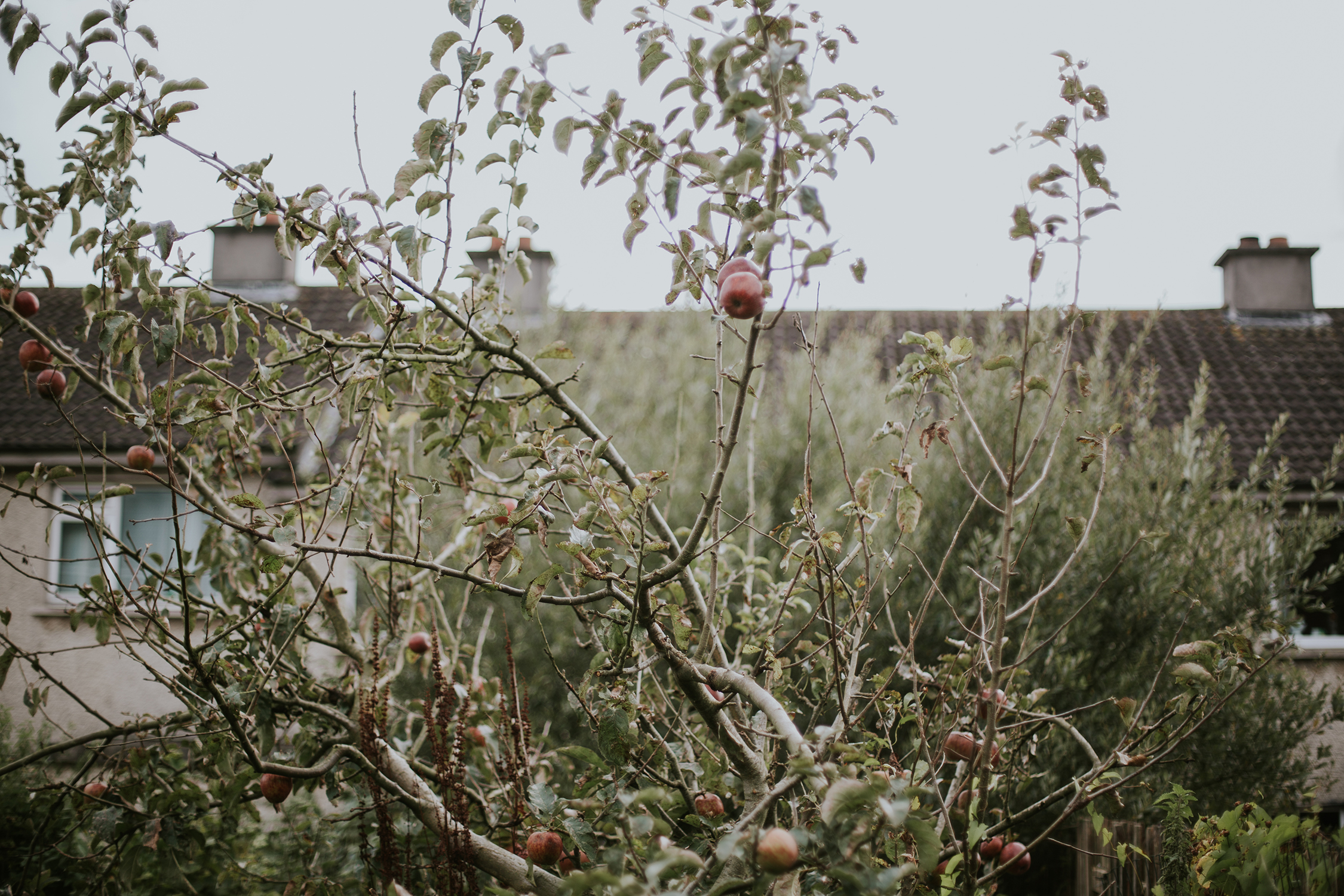 sue-slique photographer, dublin wedding photographer, family photographer in dublin, portrait photographer in wexford