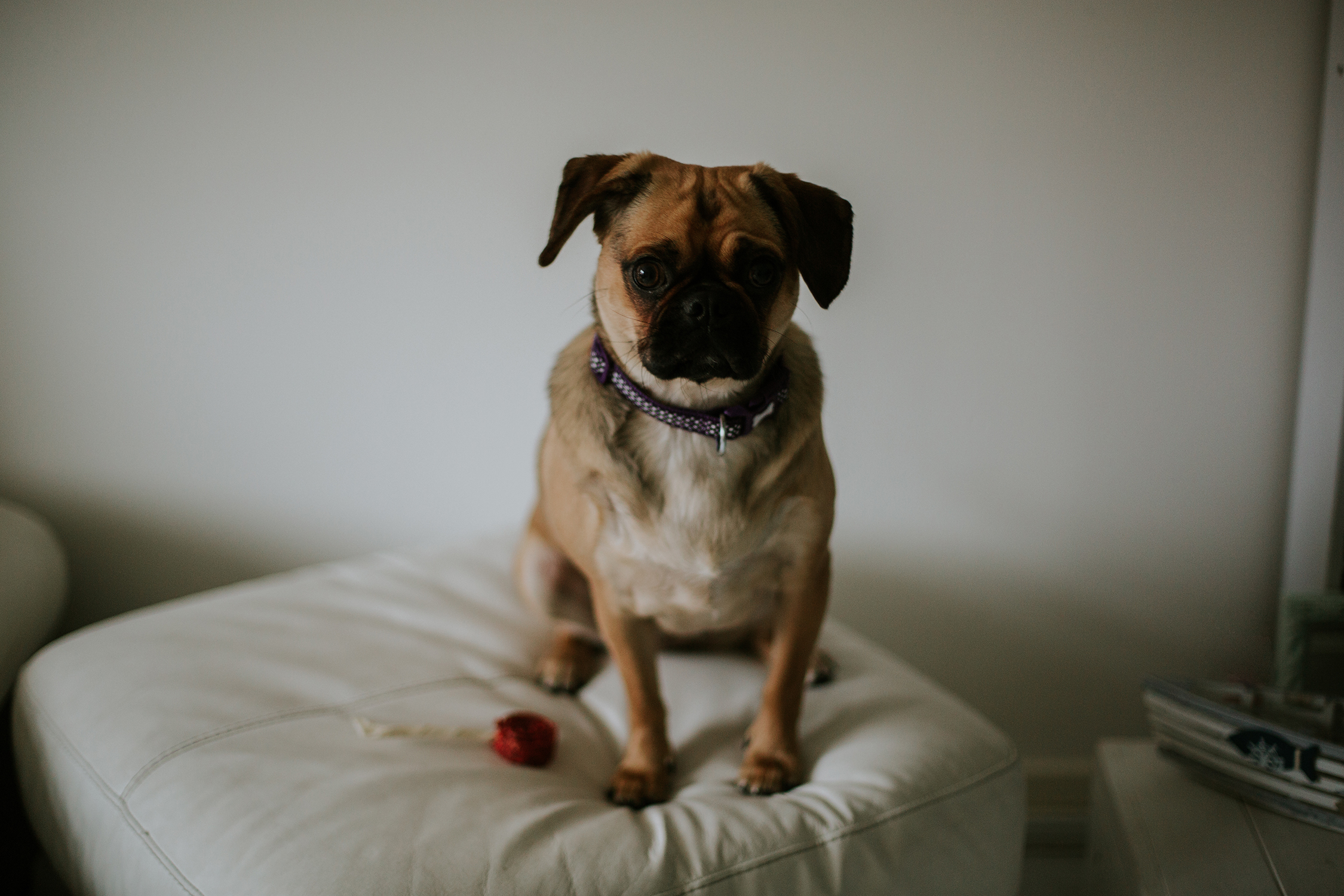 Professional pet photography Glasgow, Edinburgh, Scotland