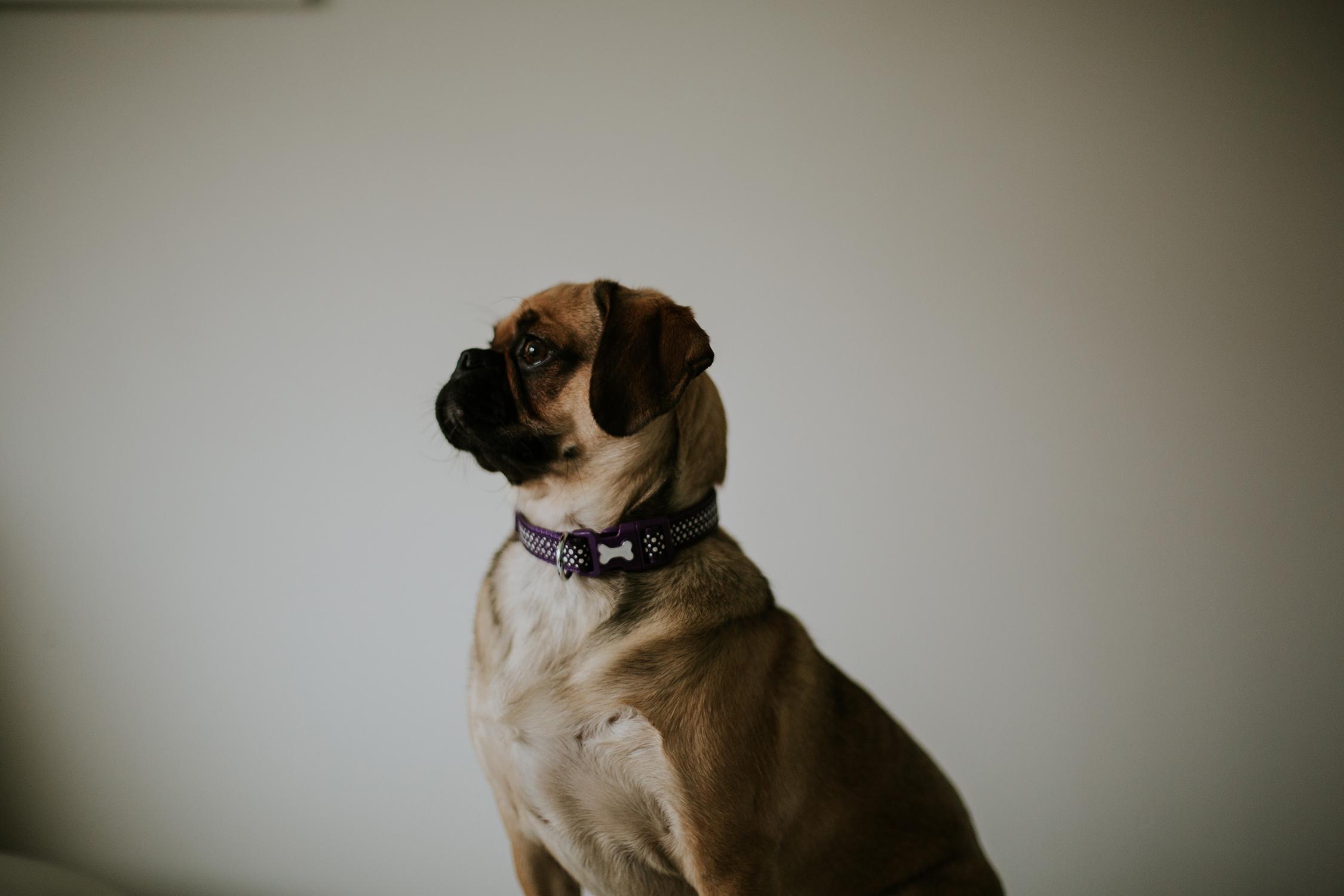 Sue-Slique Photography 2017, Pet Photography Glasgow_7.jpg