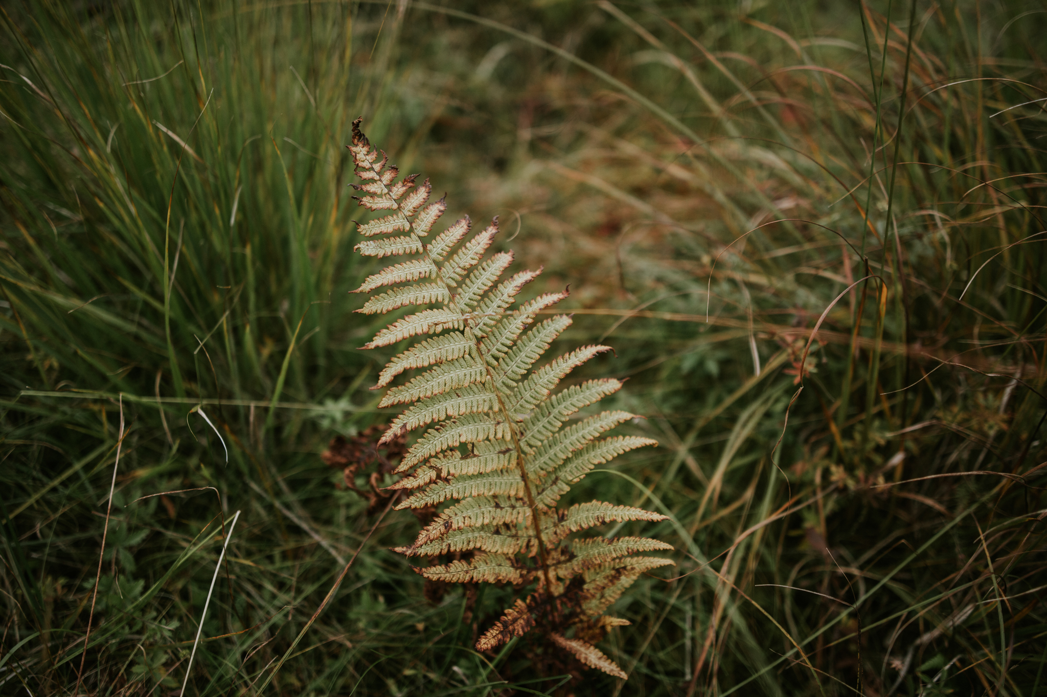 The beautiful and wild nature of the stunning Glencoe