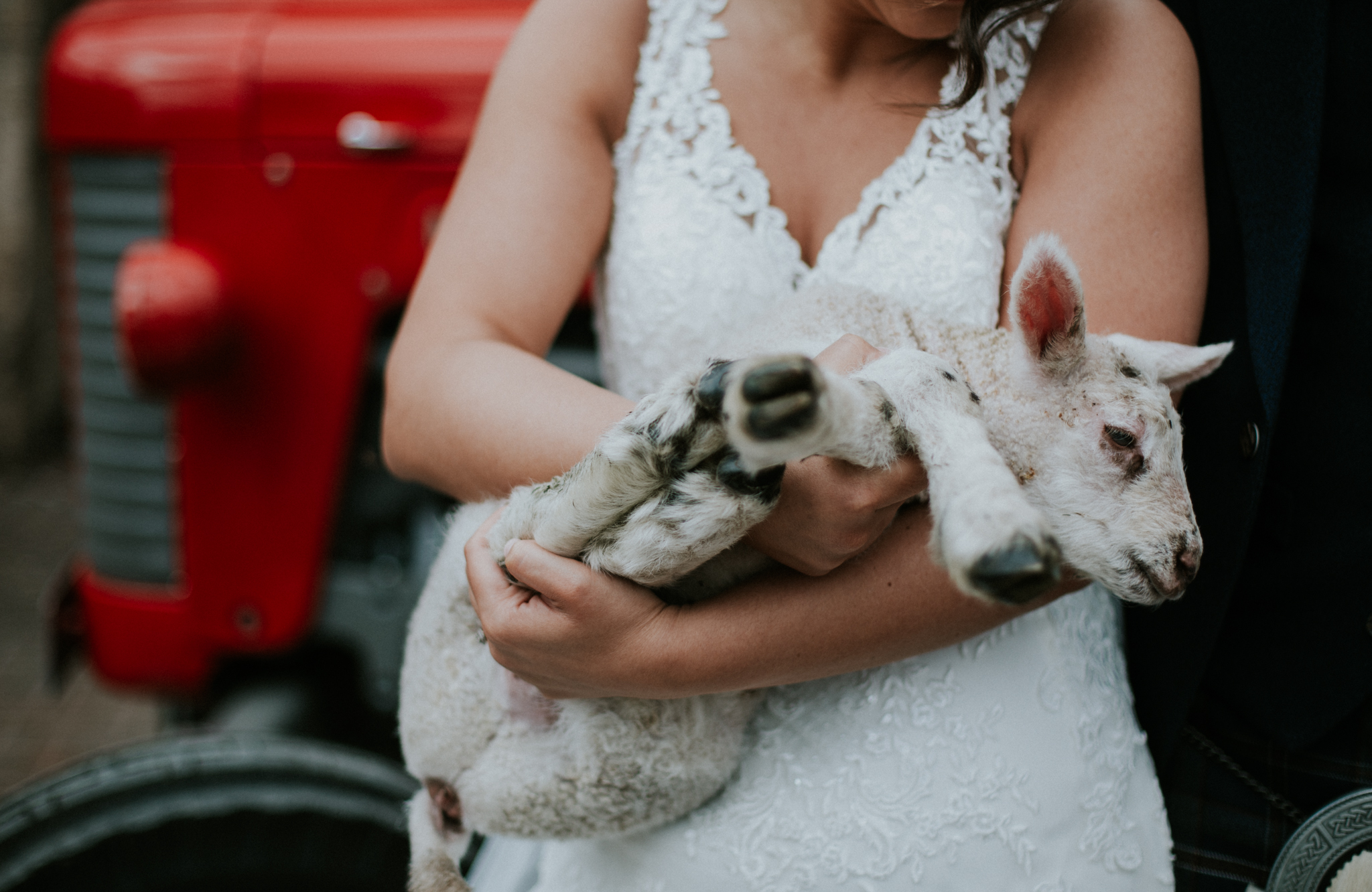 Close up shot of the bride holding the lamb