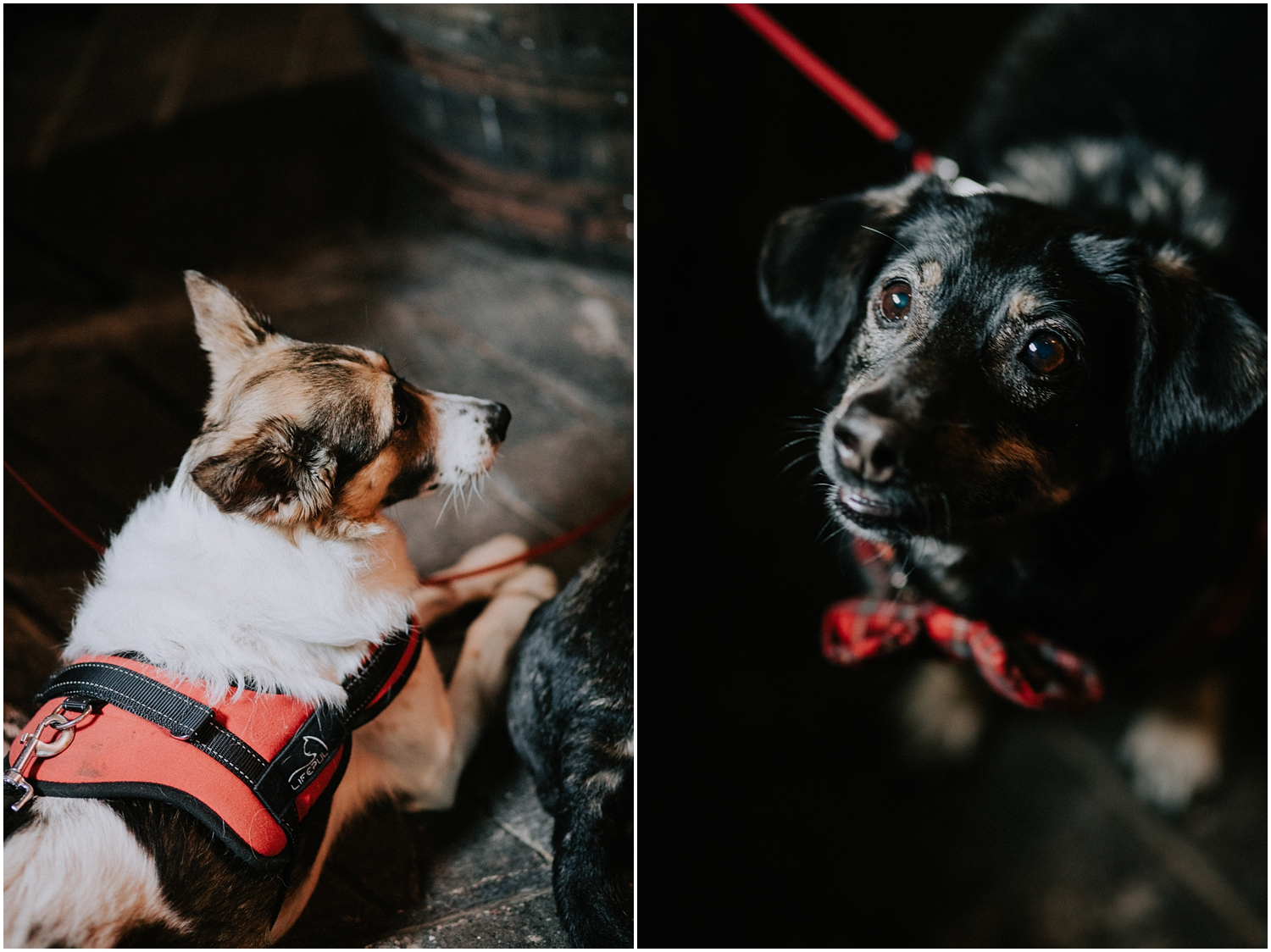 Dogs friendly wedding