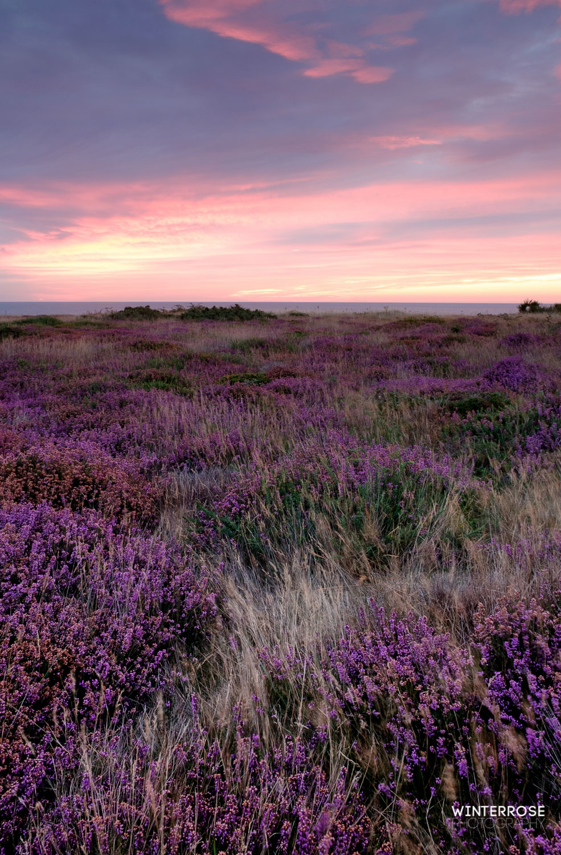 Sunrise at Dunwich Heath (saturation is -10!)