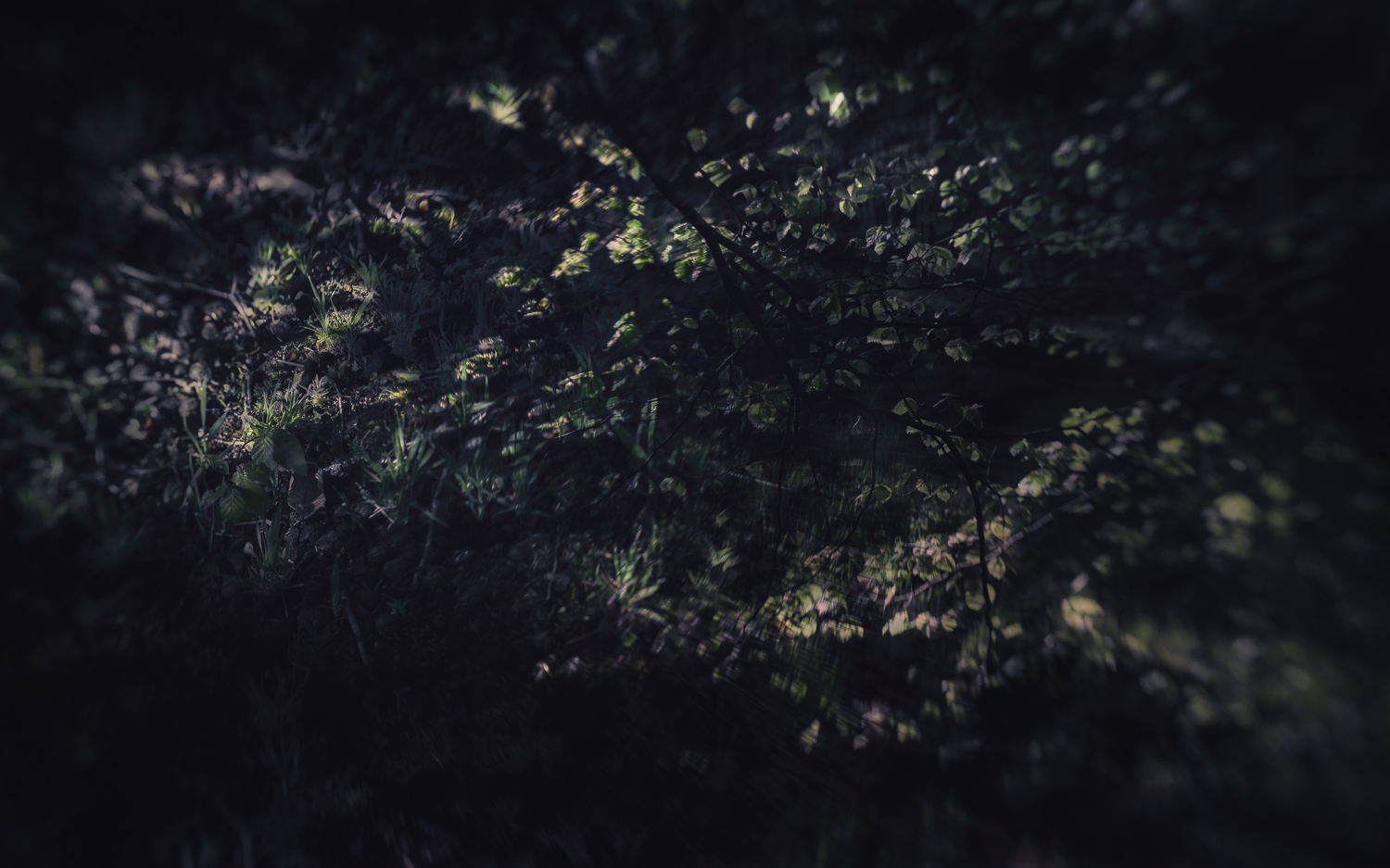 Putting the multiple exposure app to use in Padley Gorge with wonderful light and green leaves. The lensbaby composer really helped to pick out key areas of focus in this shot (and Doug's pencil trick - no, no that one - worked a treat).