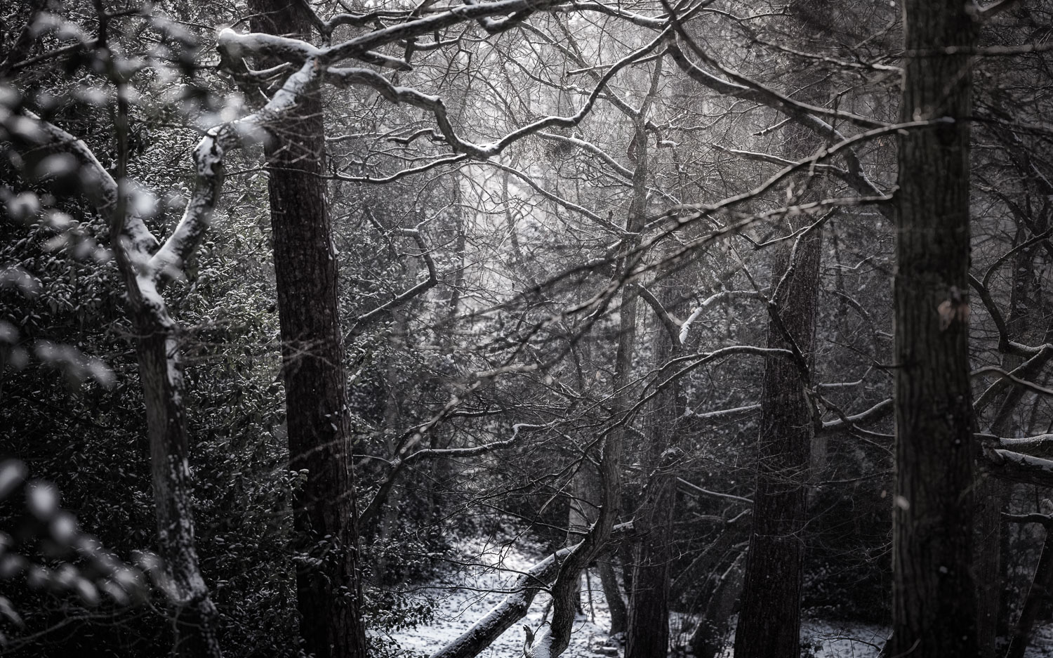 Not a typical winter wonderland shot, but I love photographing woodland in all conditions. There was some fast moving cloud overhead, so moments of good light were fleeting, but when they did break through it created a wonderful mood in the woods.