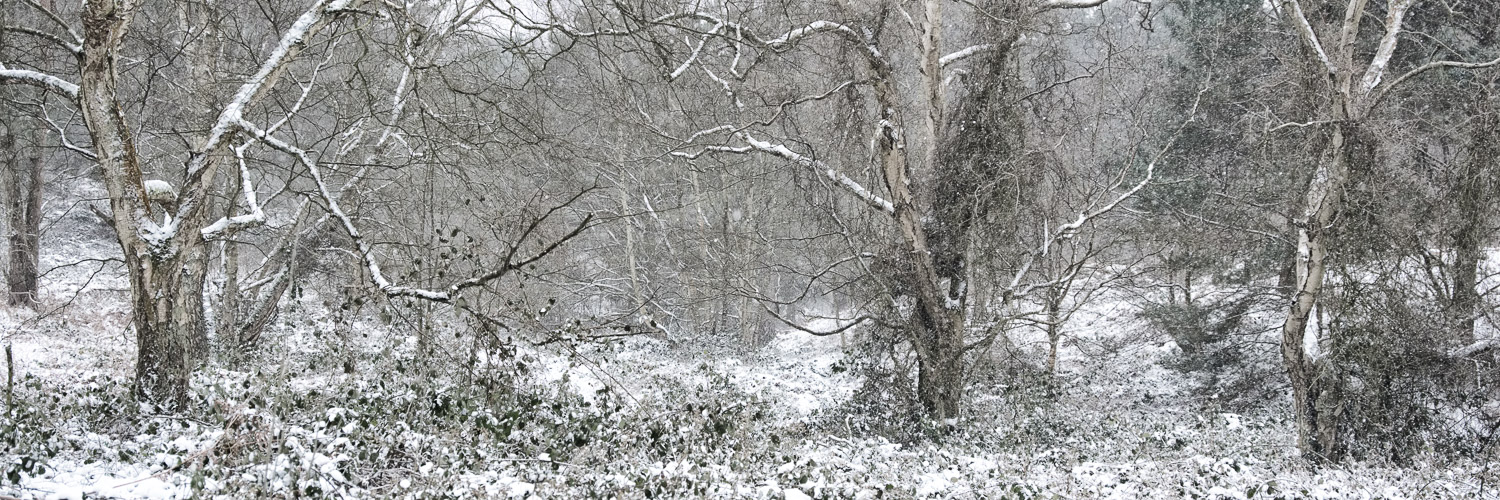 The woods at the edge of Shire Oak Heath in the snow. A rare, but lovely sight.