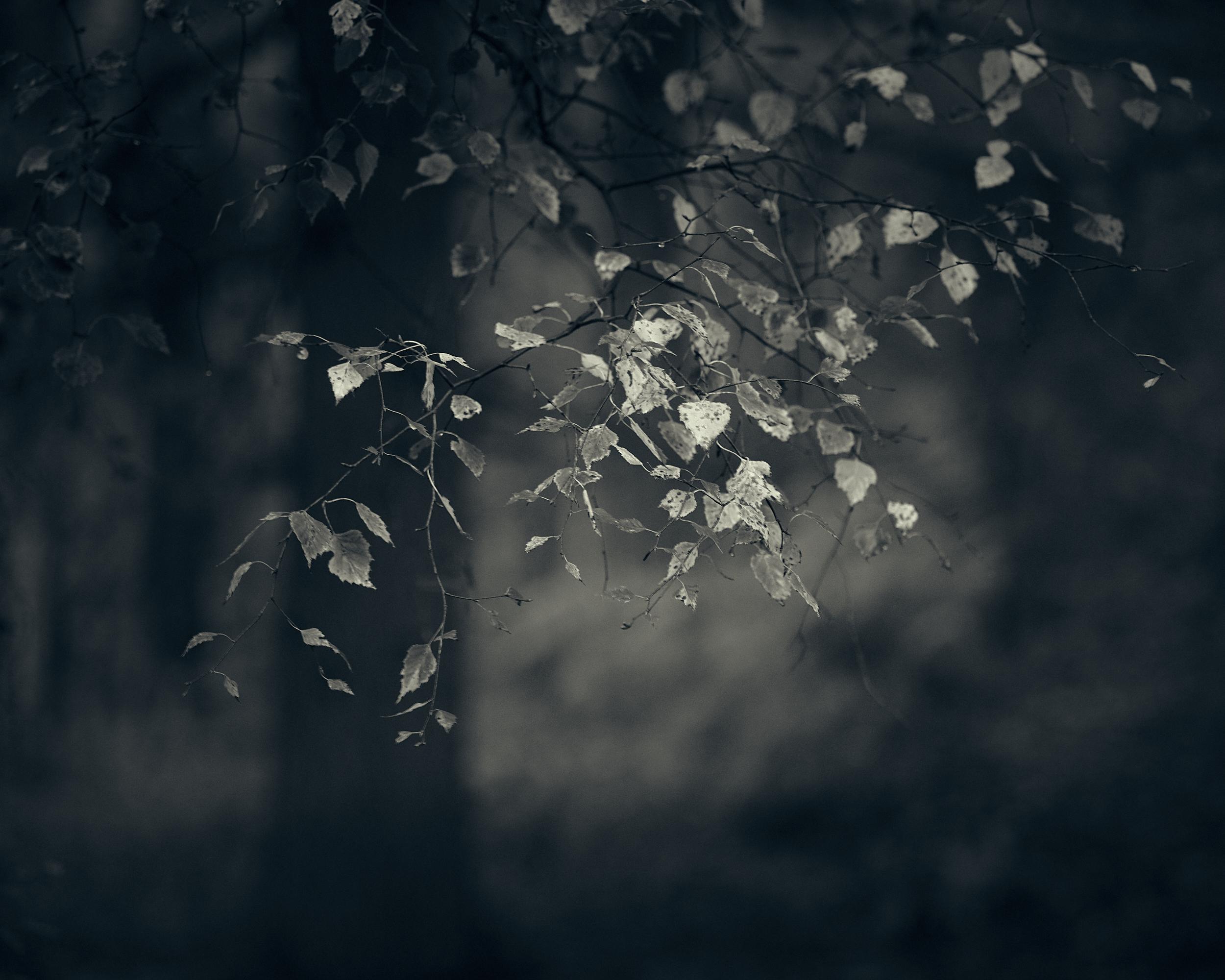 Heath and Reach - Darren Rose Photography 1.jpg