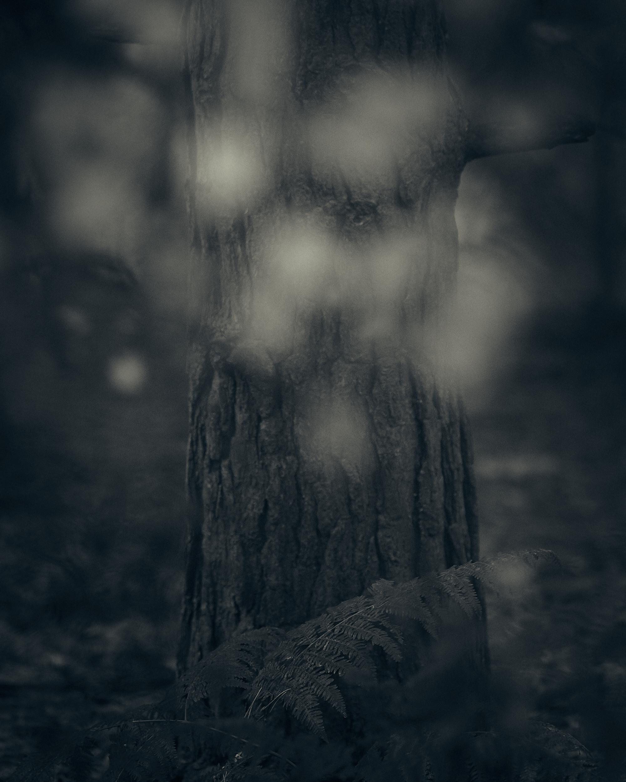 Heath and Reach - Darren Rose Photography 3.jpg