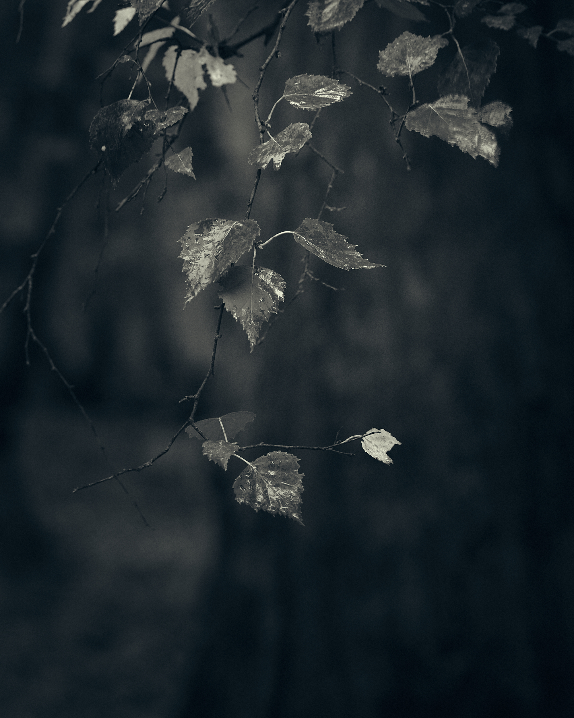 Heath and Reach - Darren Rose Photography.jpg