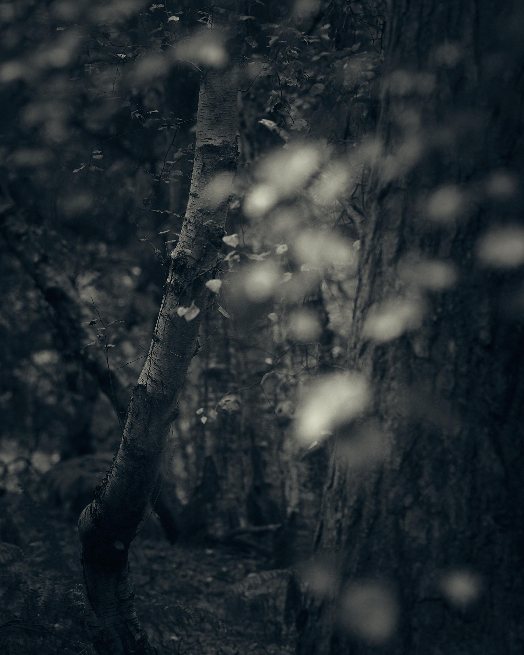 Heath and Reach - Darren Rose Photography 2.jpg