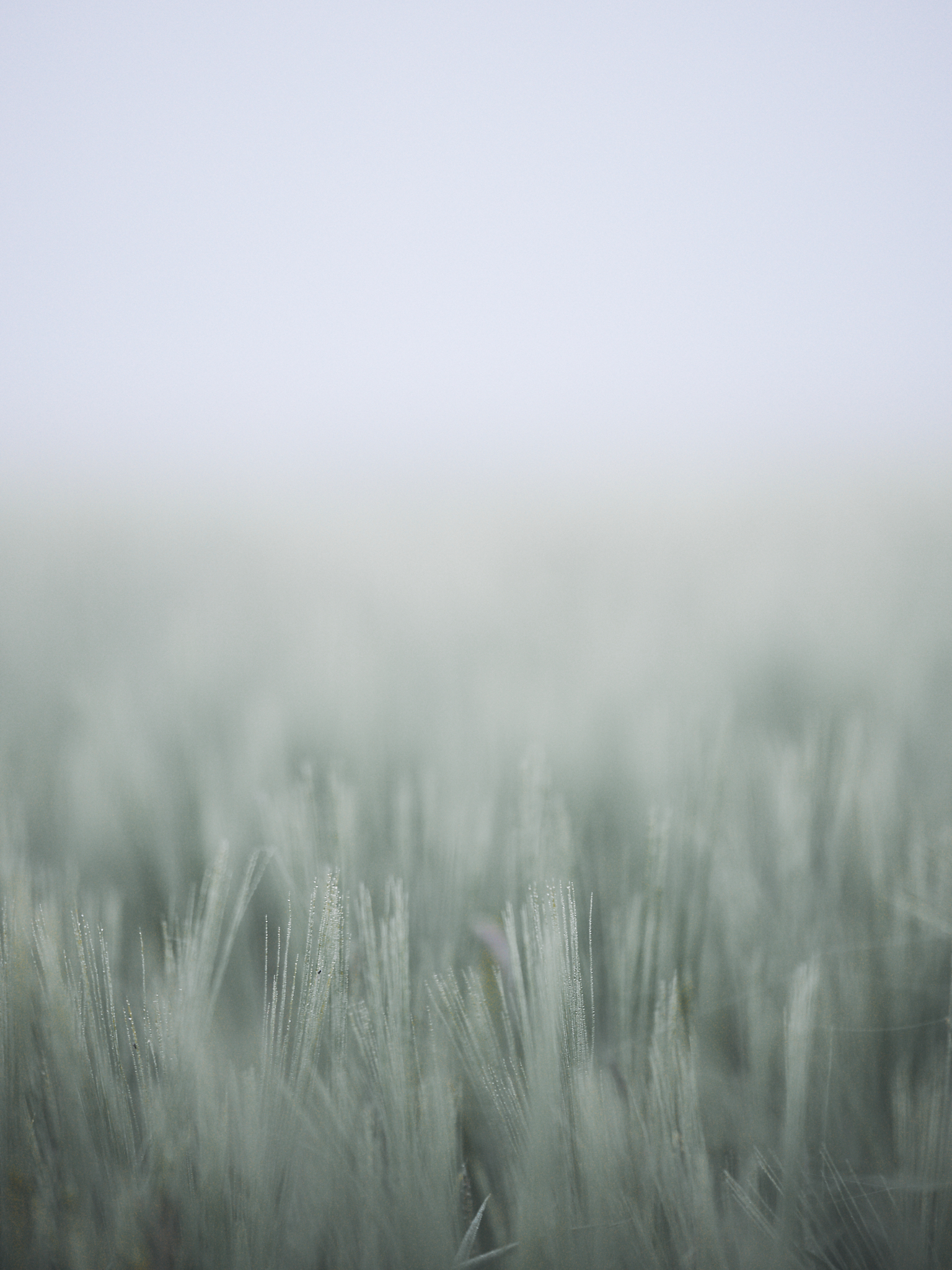 Field in thick fog