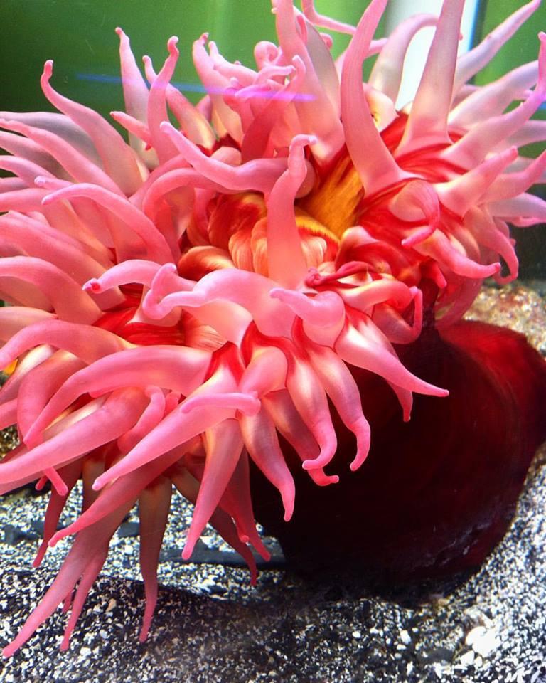 anemone+1.jpg