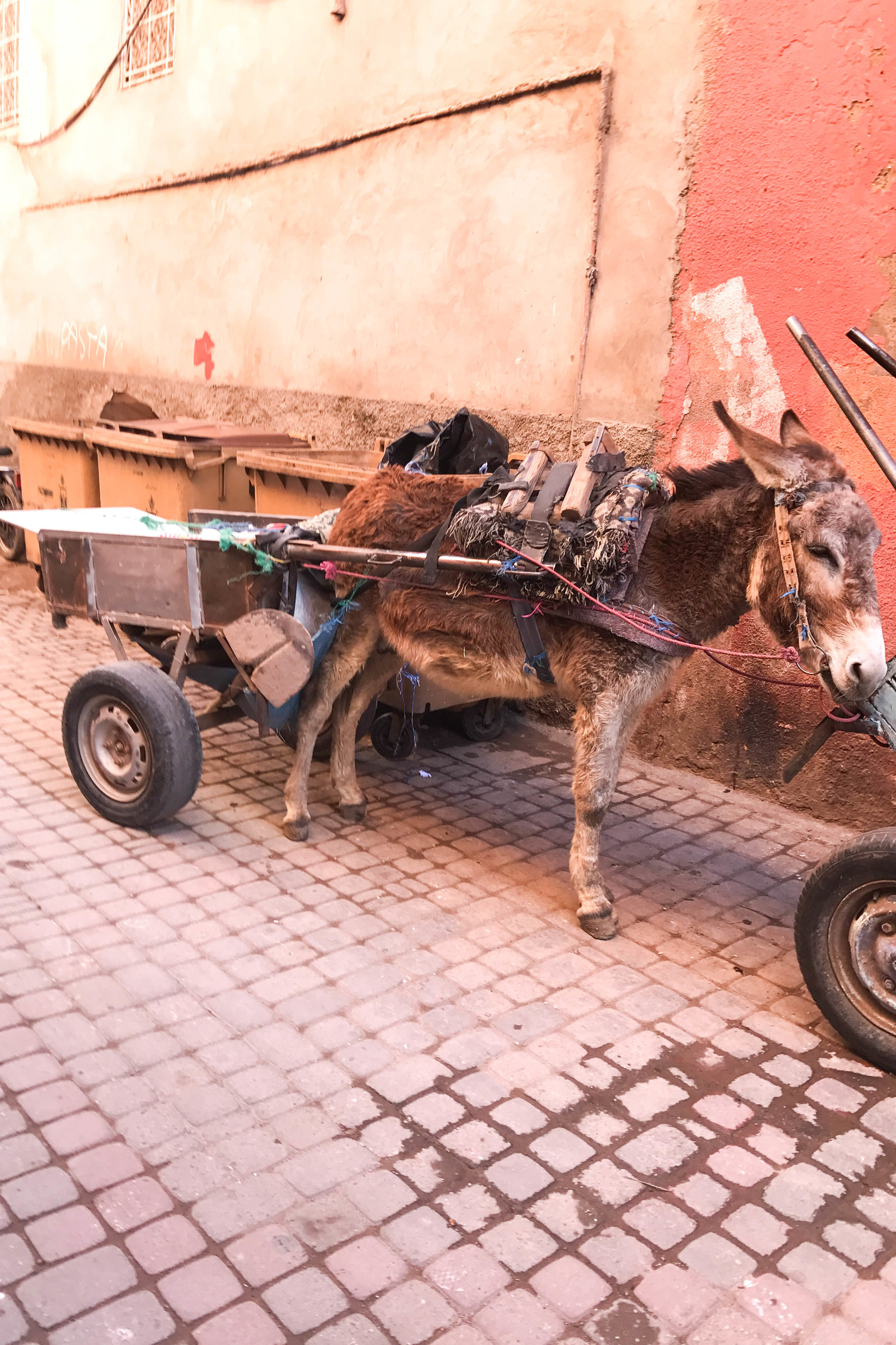 doney_marrakech_medina