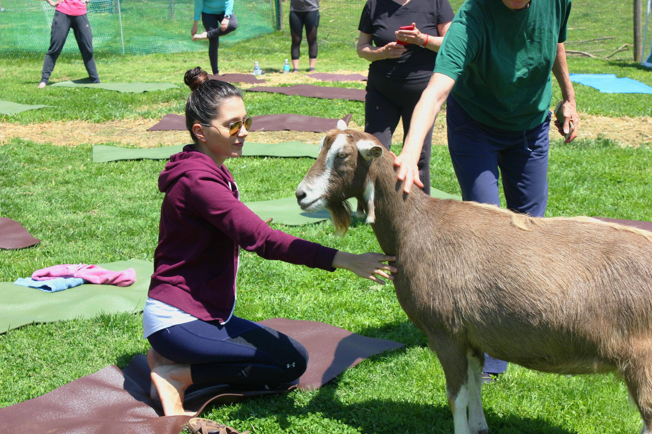 Emmas Daisy Hill Farm Goat Yoga Maryland.JPG