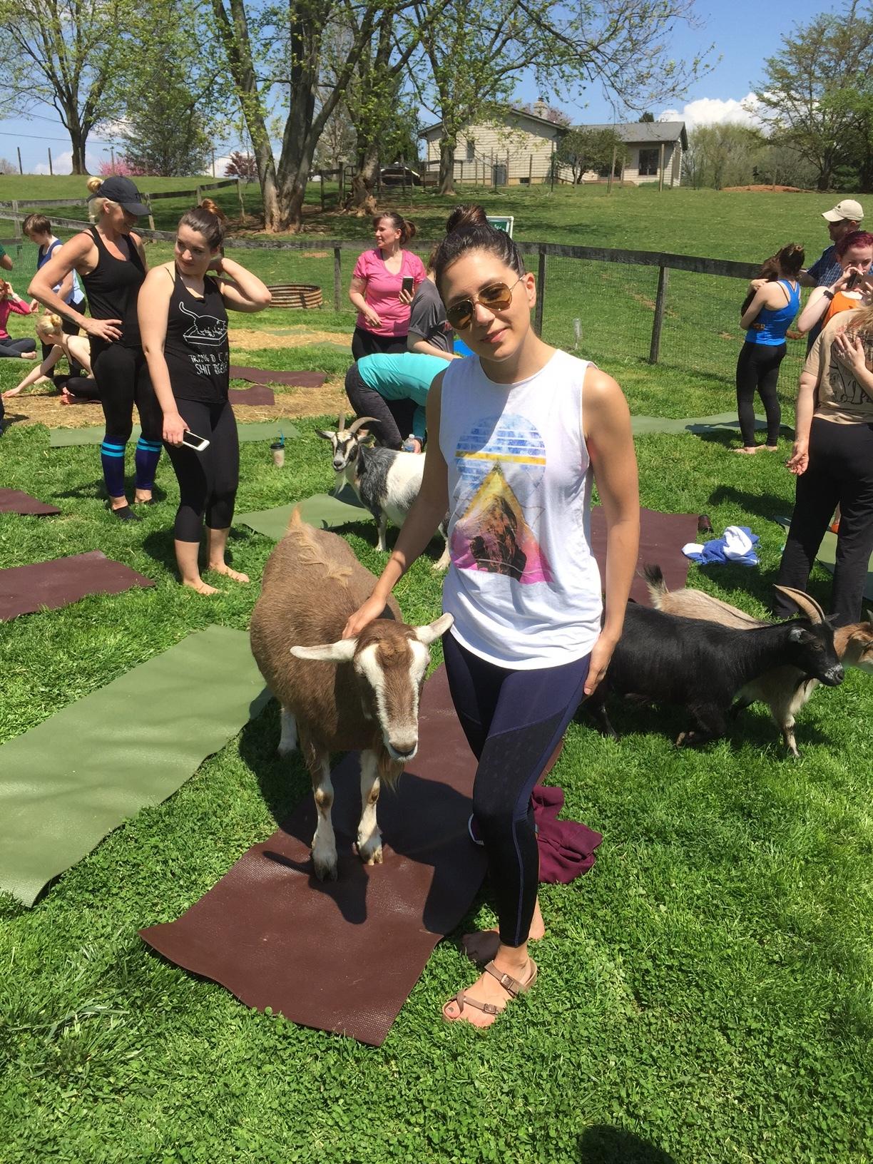 Goat Yoga Maryland By Elly Jane Blog.JPG