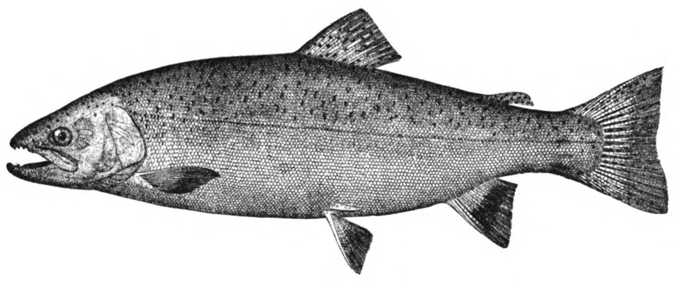 The American Angler, Dec.–Jan. 1895–96