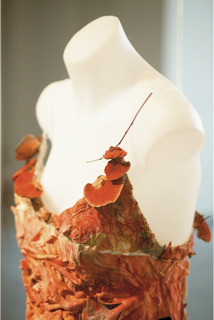 Donna Franklin, Fibre Reactive (2004), pcynoporus coccineus , silk. Photograph, Robert Firth. Image courtesy of SymbioticA.