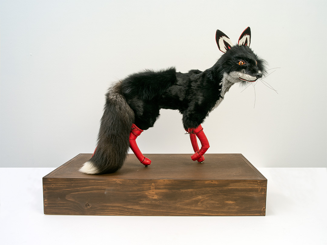 Artwork from Dark Rituals Exhibition, USC Art Gallery: Beata Batorowicz Black Fox with Red Leather Boots, 2018. Fur, leather and wood, Dimensions: 70 x 83.5 x 44 cm (With permission of the artist, Photo: Carl Warner).