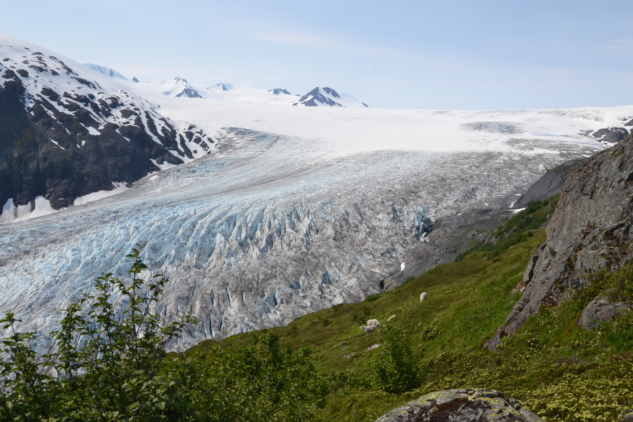 one of the most unforgettable sites (where i fell in love with glaciers) was this spot we picked for our lunch overlooking the glacier almost at the top of the harding ice trail. 2 more hours of trekking to go!  Do you see the mountain goats that joined us?