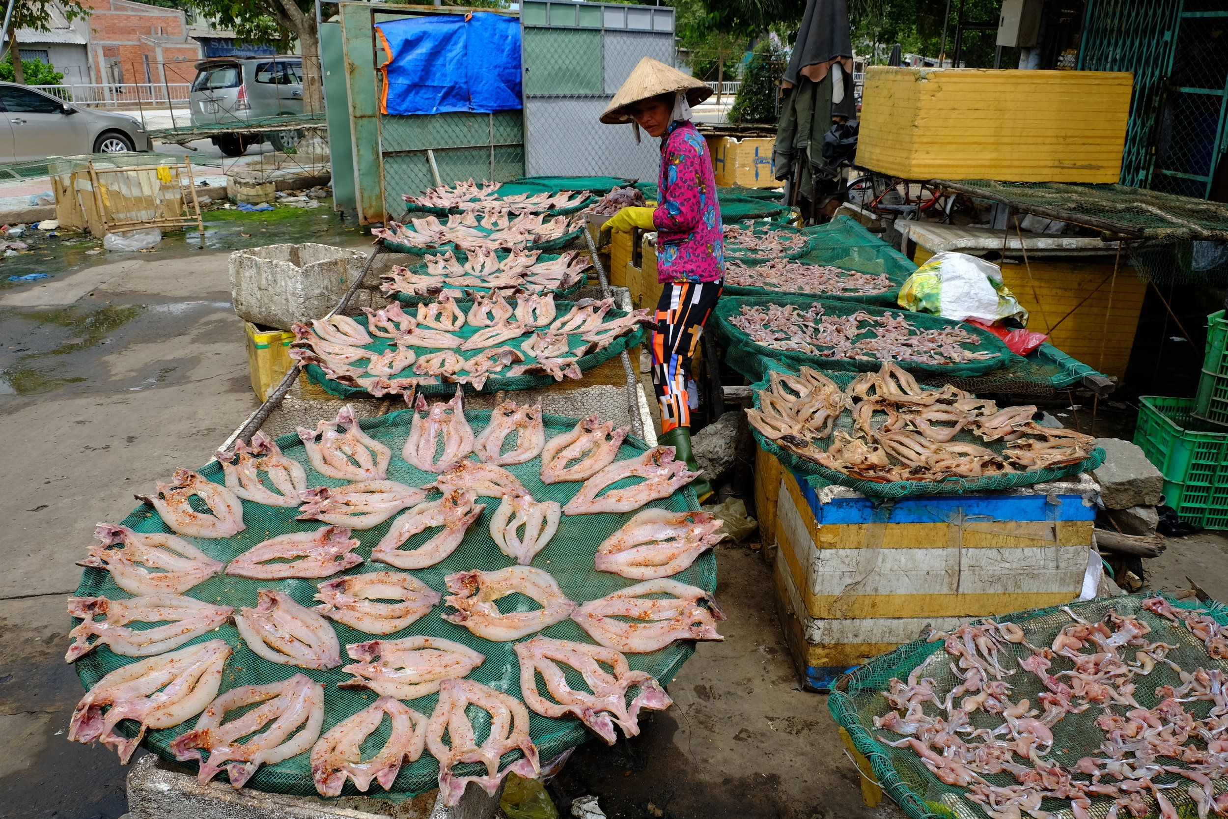 Squid laying out to dry.