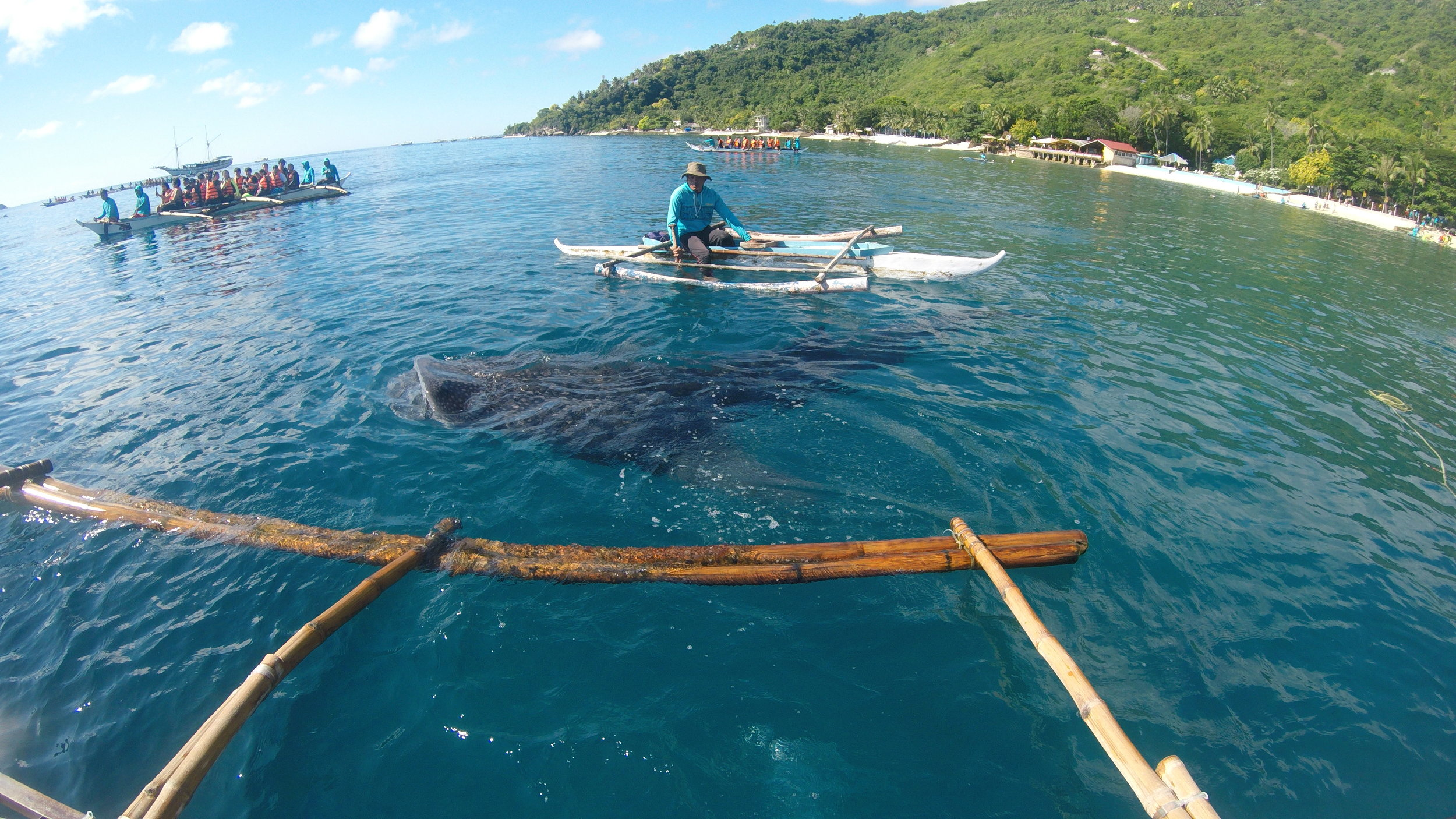 snorkeling alongside whale sharks, don't worry they are friendly