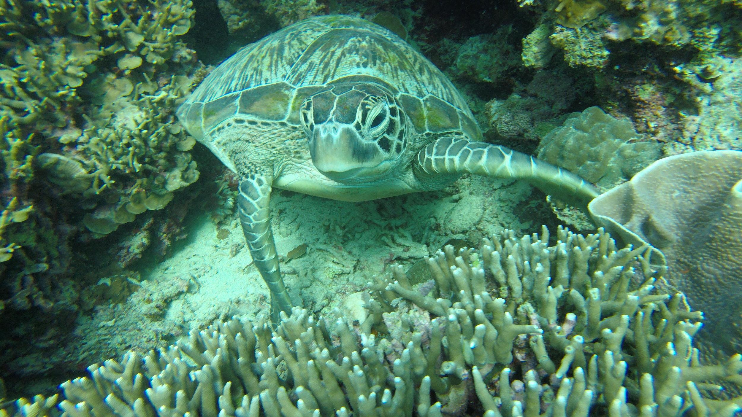 we found a turtle!