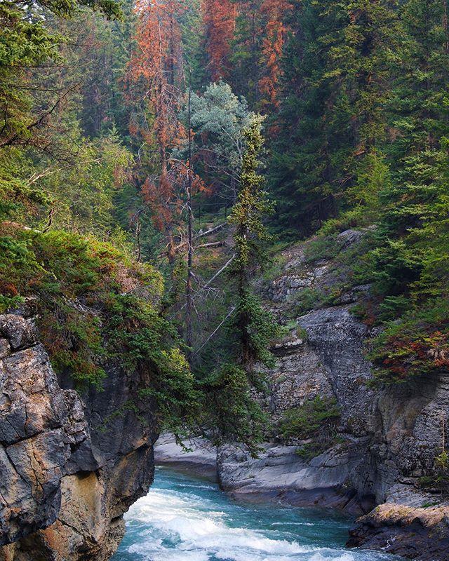 Might need another road trip out to Jasper soon... . 🌲 🇨🇦 🏔  #malignecanyon #jaspernationalpark #rockies #explorecanada #explorealberta #exploremore #getoutside #roadtrip #borealnorth #borealnorthoutdoors #travelcanada #hikes #roadtrip