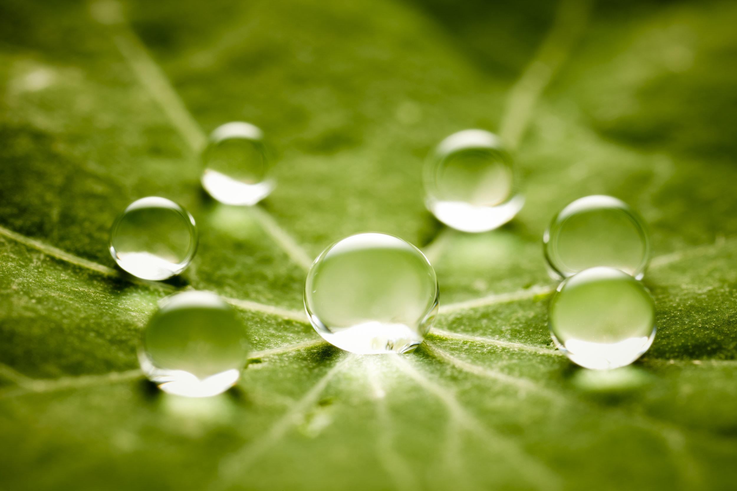 Water Drops on Leaf.jpg