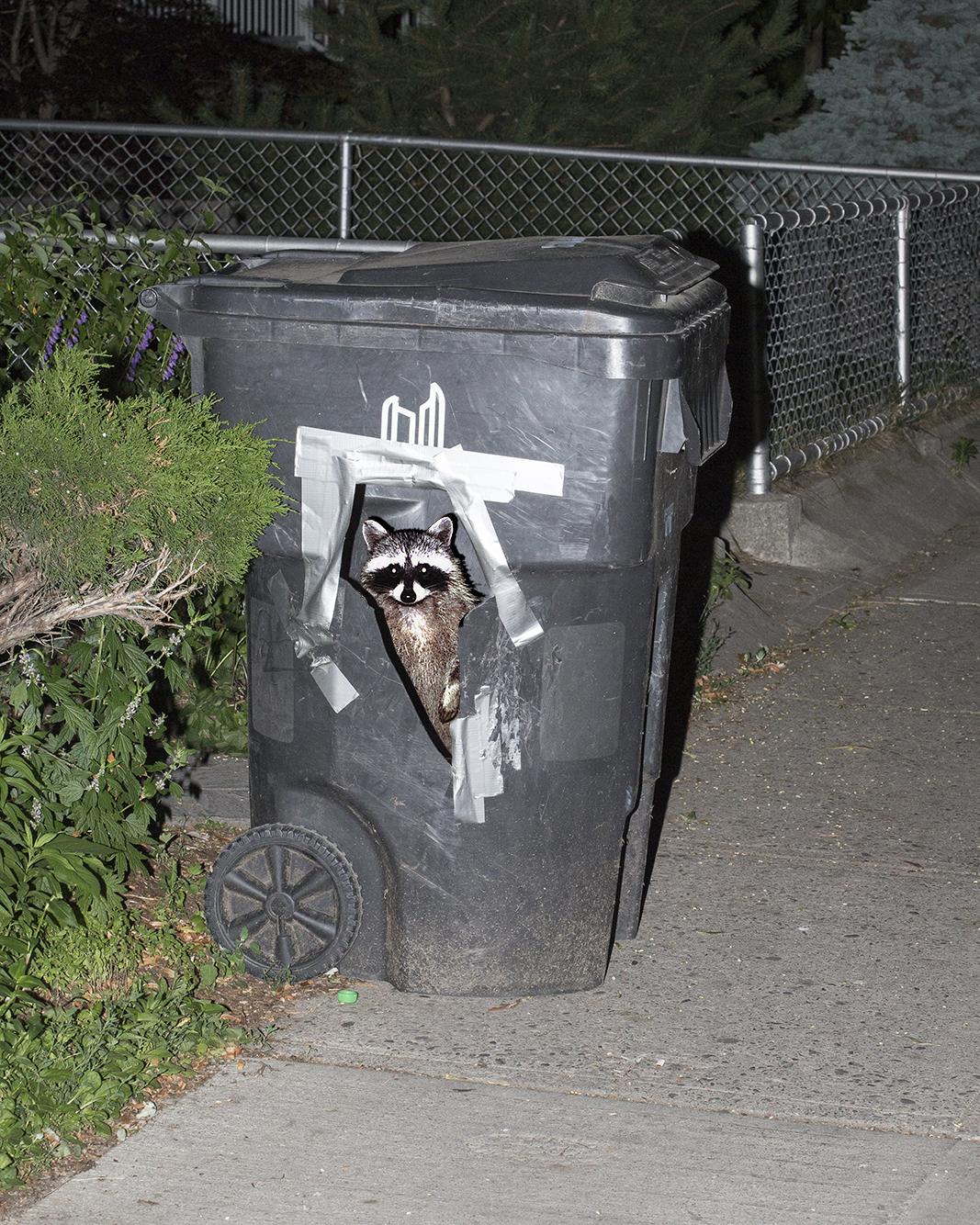 raccoon copy.jpg