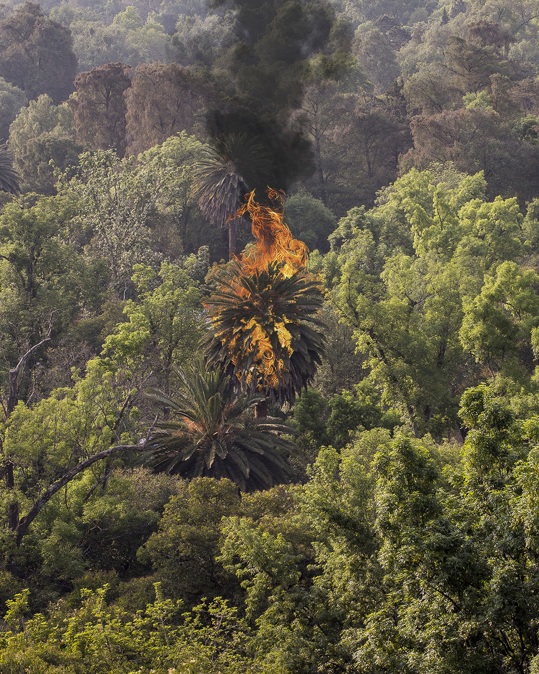 tree fire copy.jpg