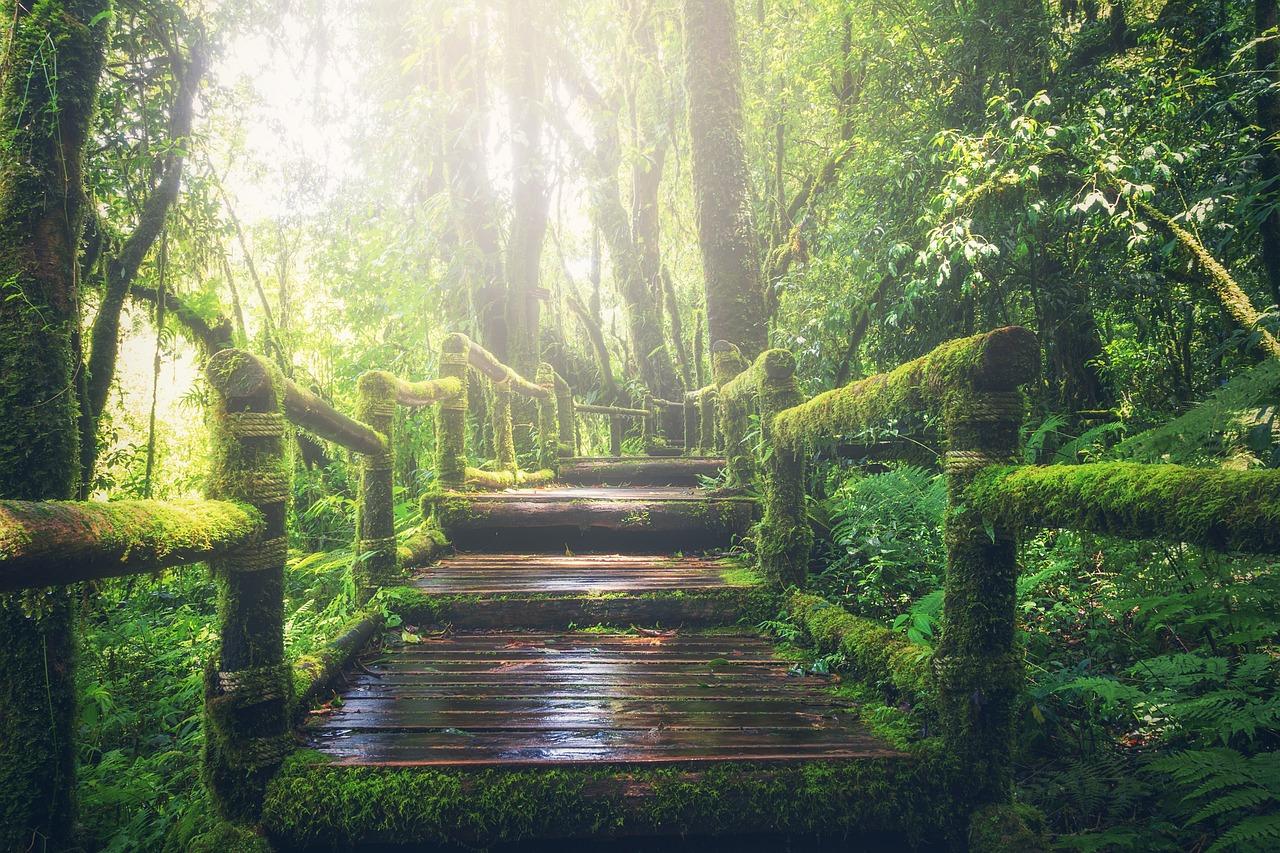 jungle-1807476_1280.jpg