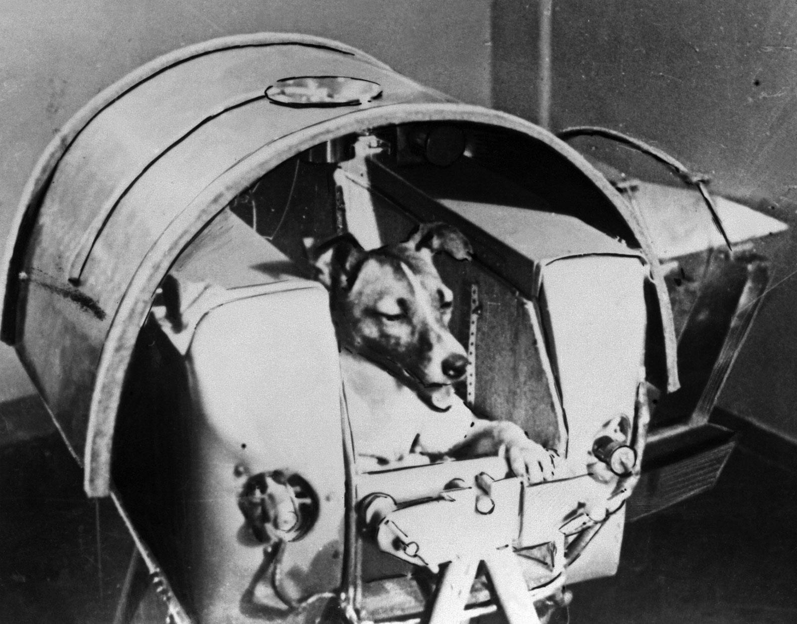 La perra Laika en el interior del Sputnik ruso