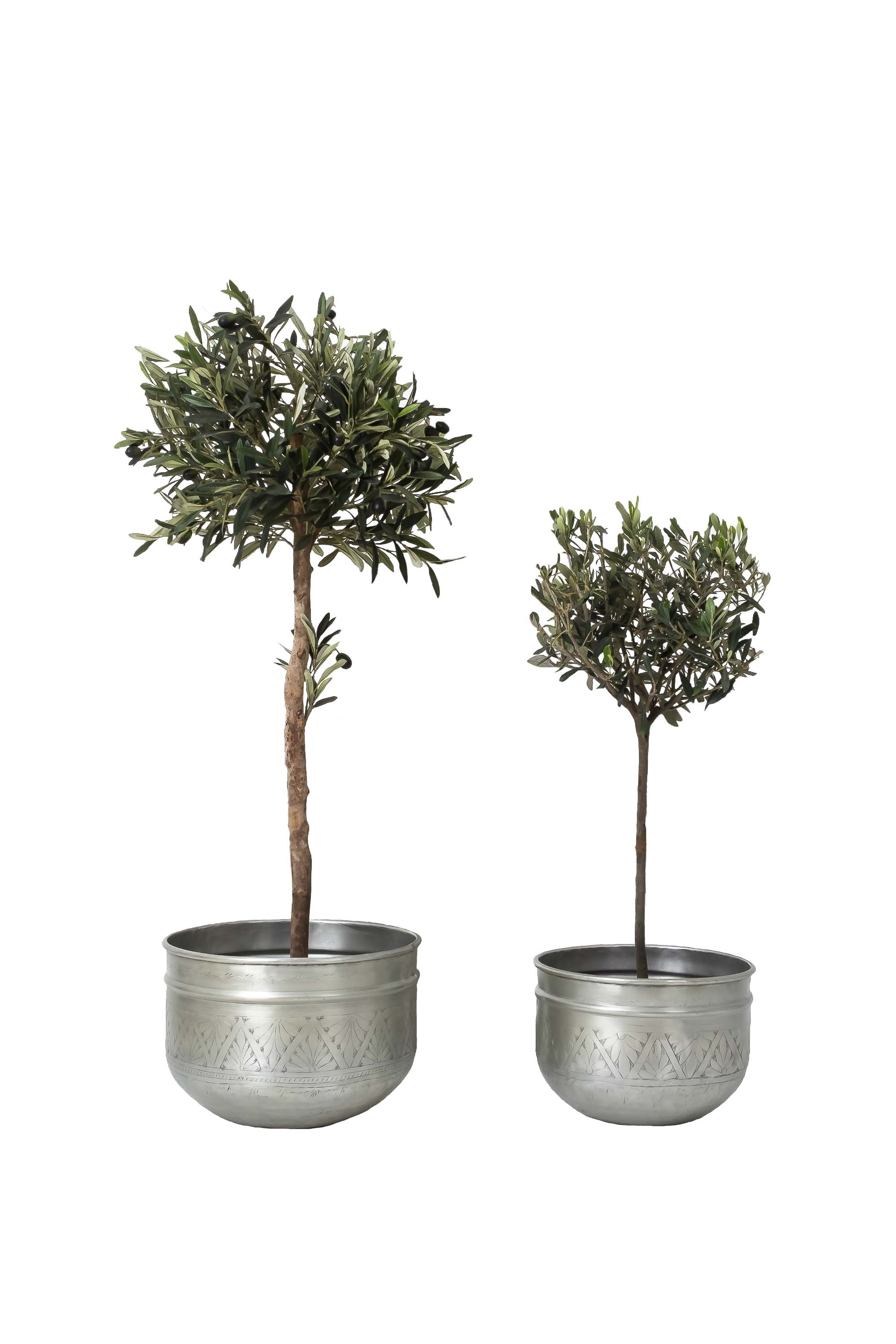 India May Home planters