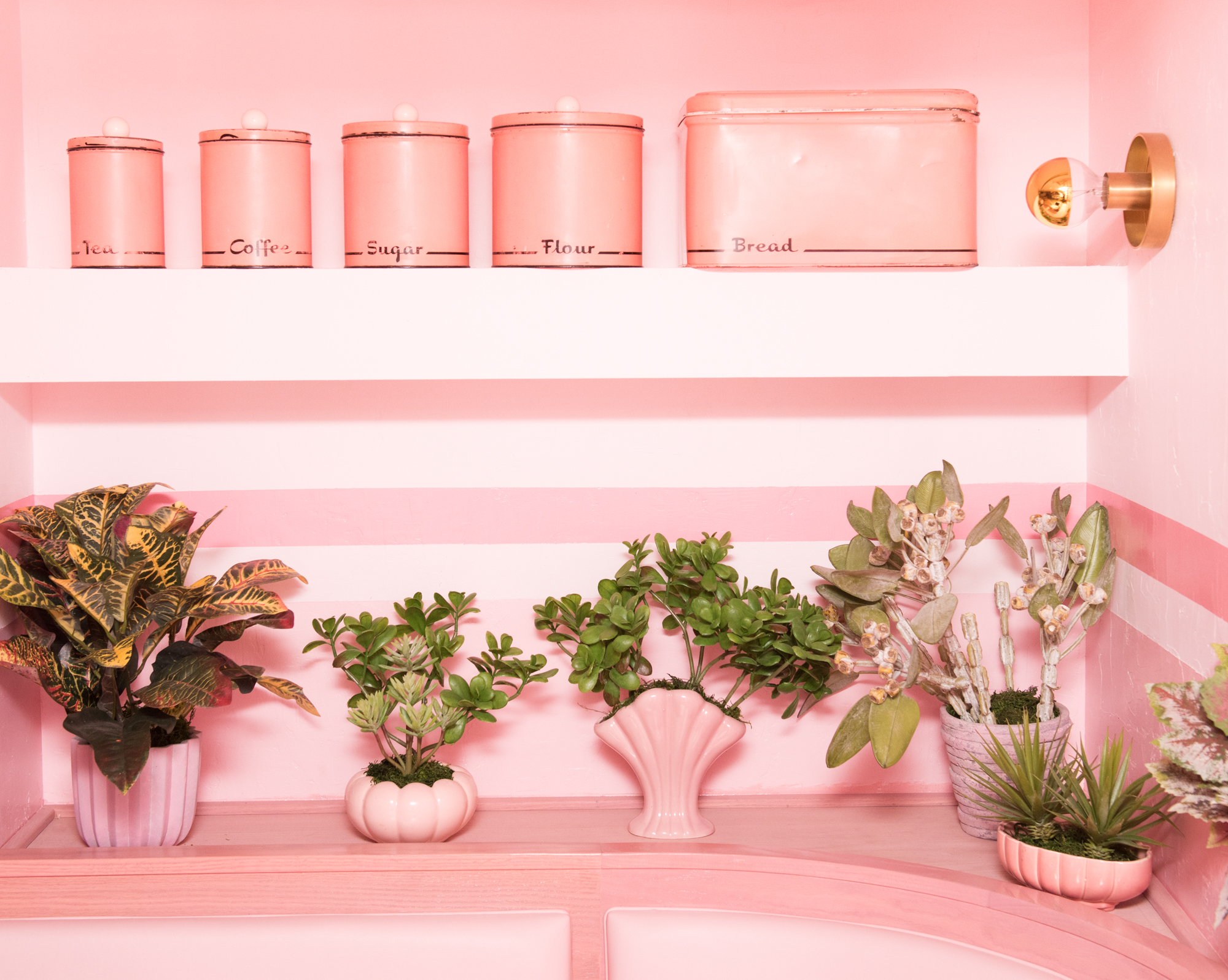 Plants at Pietro Nolita/Photo:  Jake Rosenberg  for The Coveteur