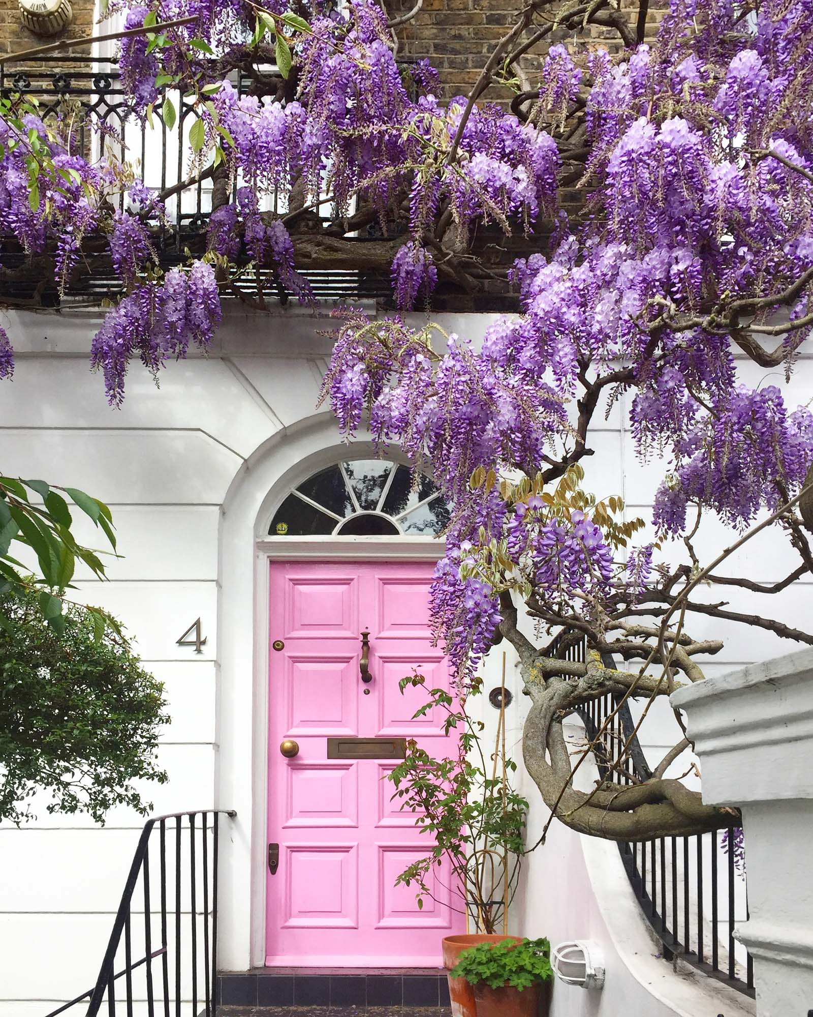 Julie's photo of a pink London front door and some #wisteriahysteria