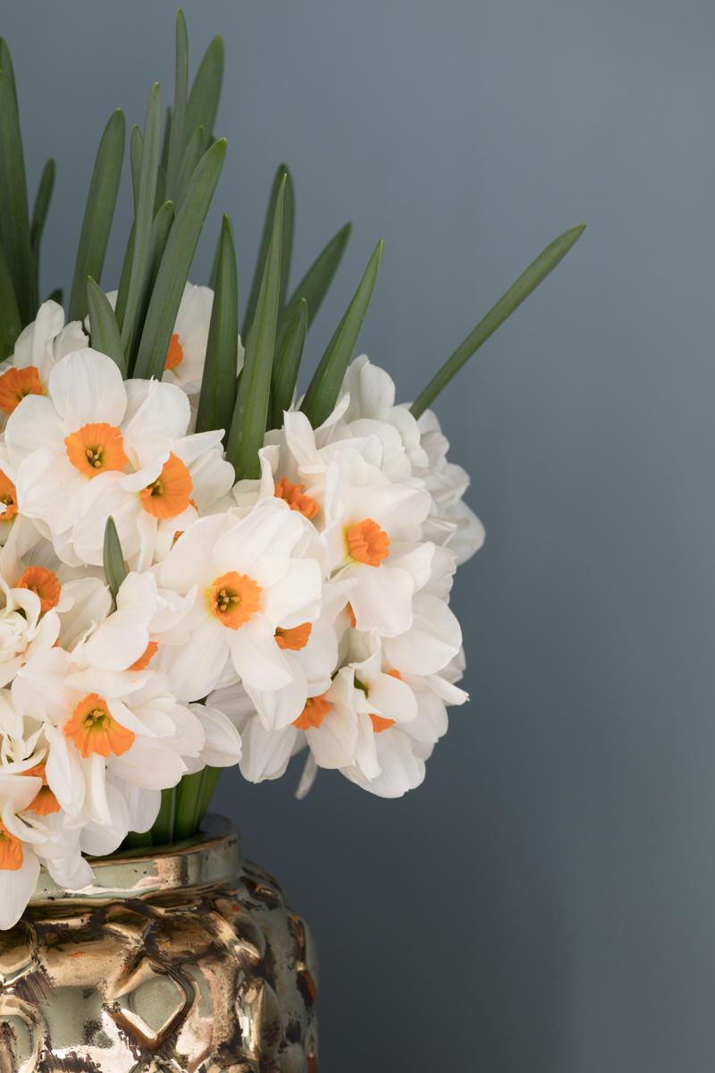 Narcissus flower arrangement by Hayford & Rhodes