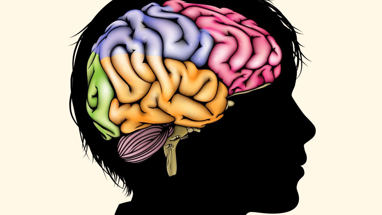 sn-brainstructureH.jpg
