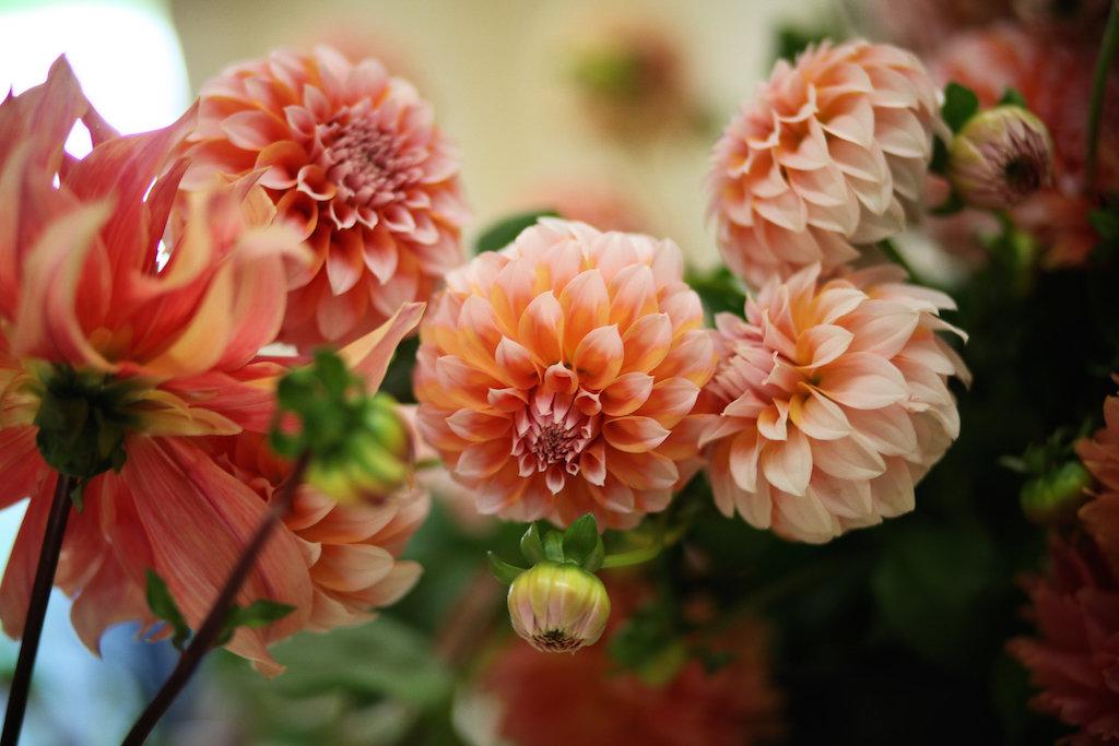 Flowers0145.jpg